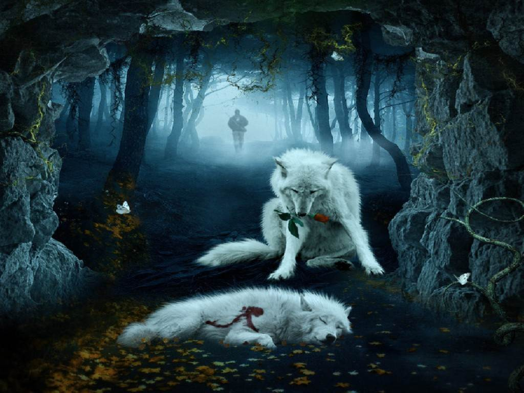 Cool Background Pictures Of Wolves