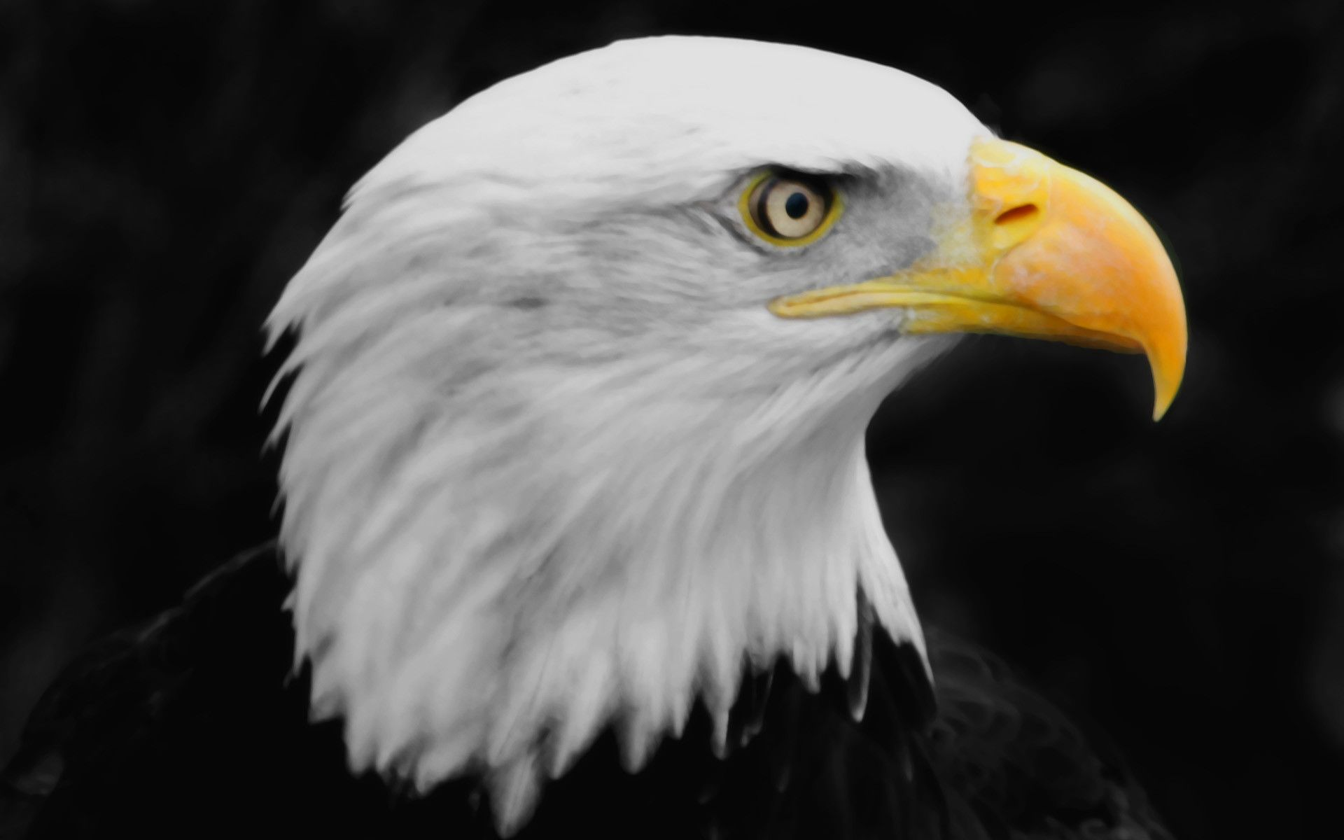 44 Best Free Bald Eagle HD Wallpapers - WallpaperAccess