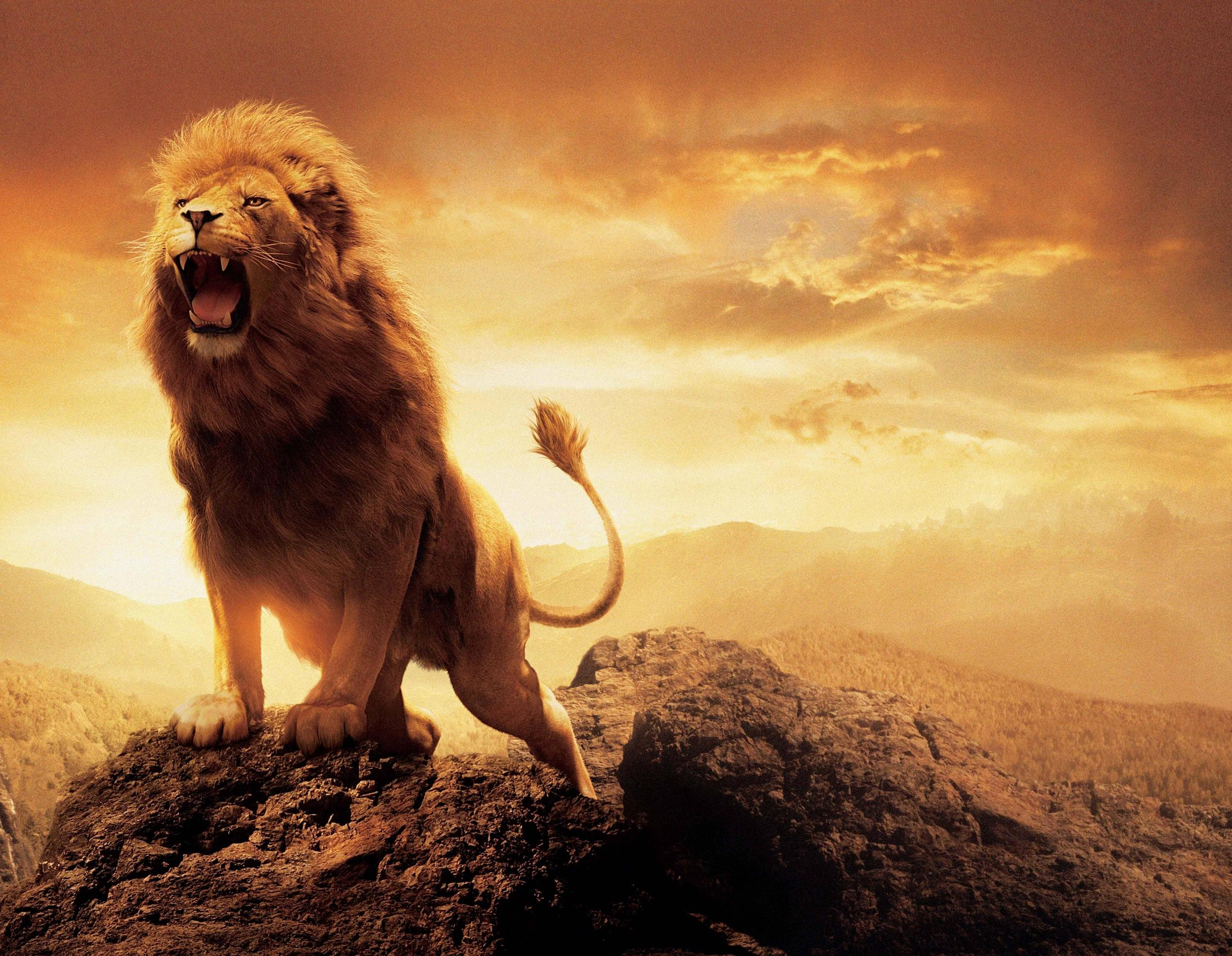 Epic Lion Wallpapers Top Free Epic Lion Backgrounds