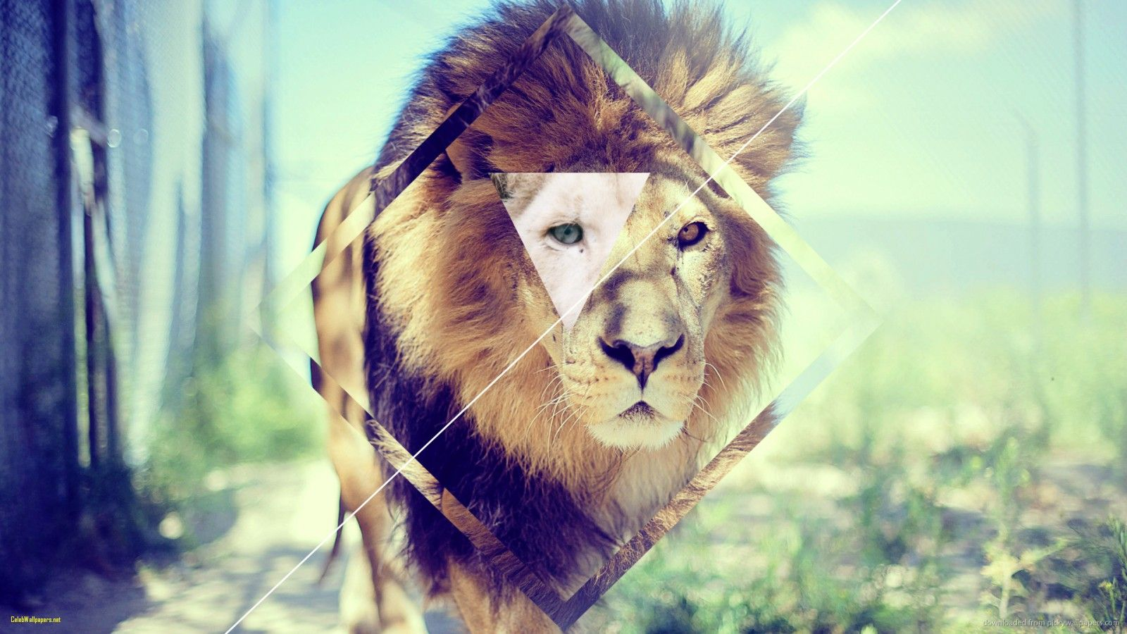 Epic Wallpaperz: Top Free Epic Lion Backgrounds