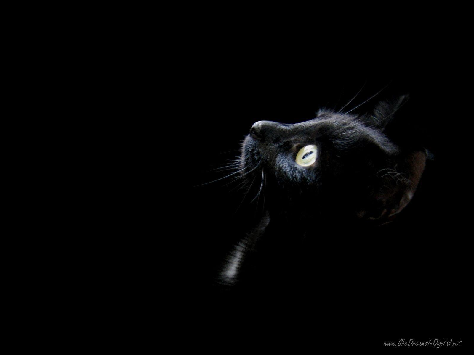 Black Cat Wallpapers Top Free Black Cat Backgrounds