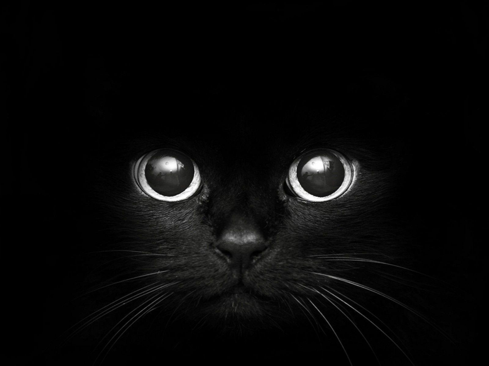 54 Best Free Black Cat Wallpapers Wallpaperaccess