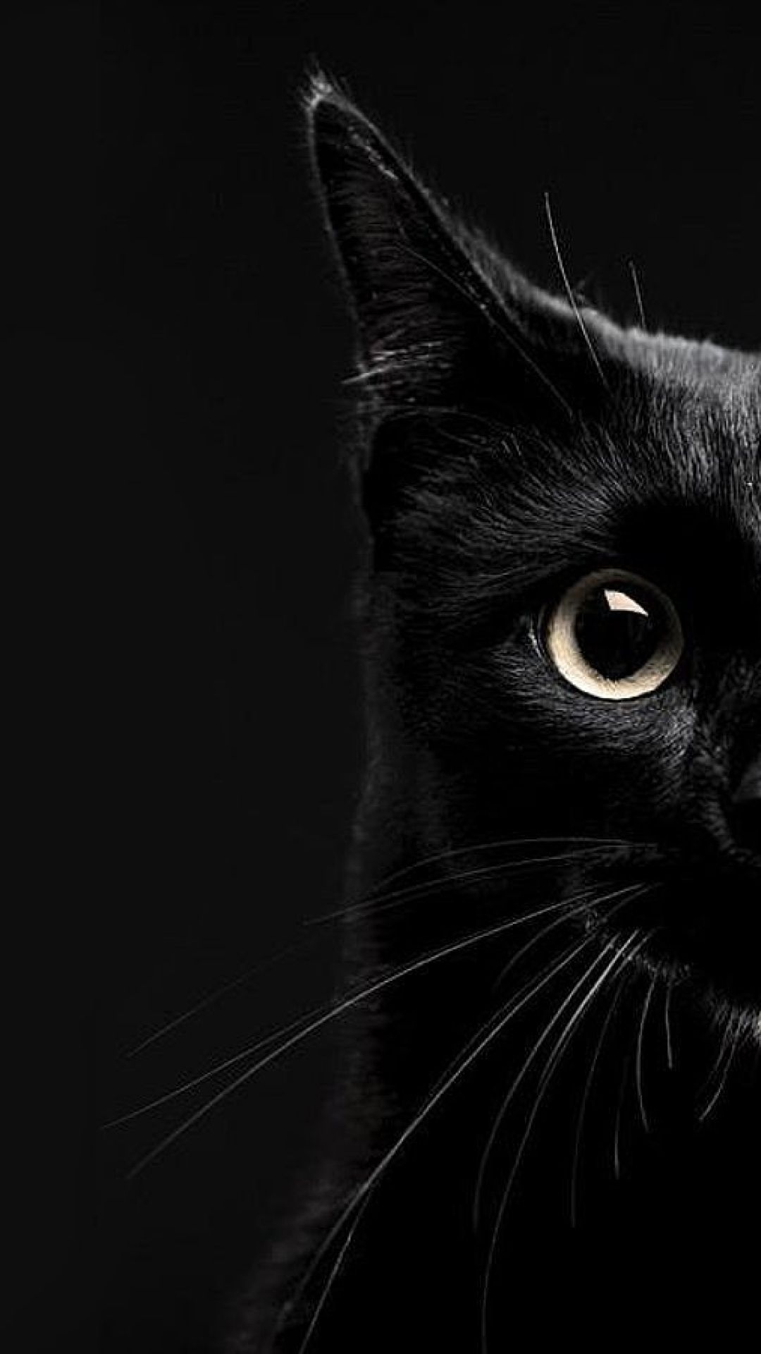 54 Best Free Black Cat Wallpapers Wallpaperaccess