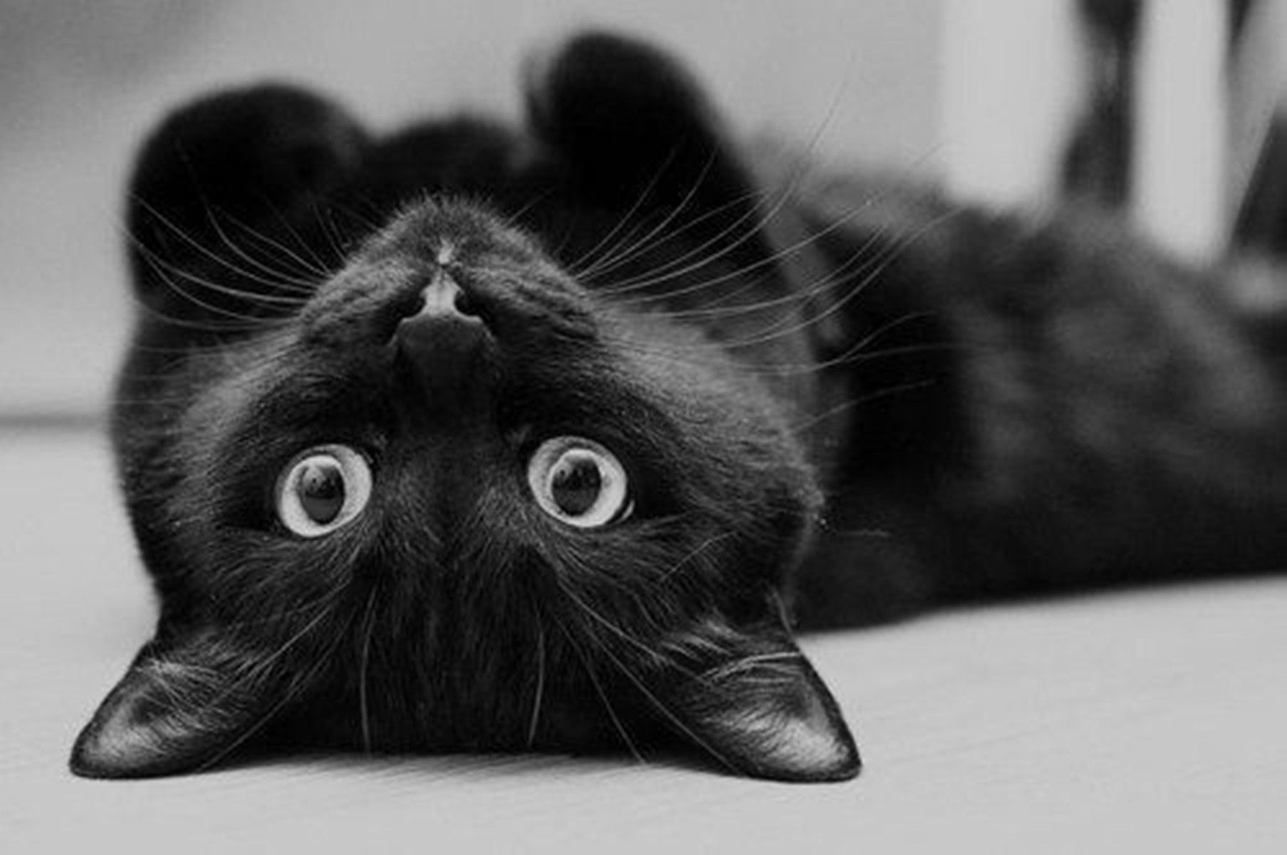 Cute Black Cat Desktop Wallpapers Top Free Cute Black Cat Desktop Backgrounds Wallpaperaccess