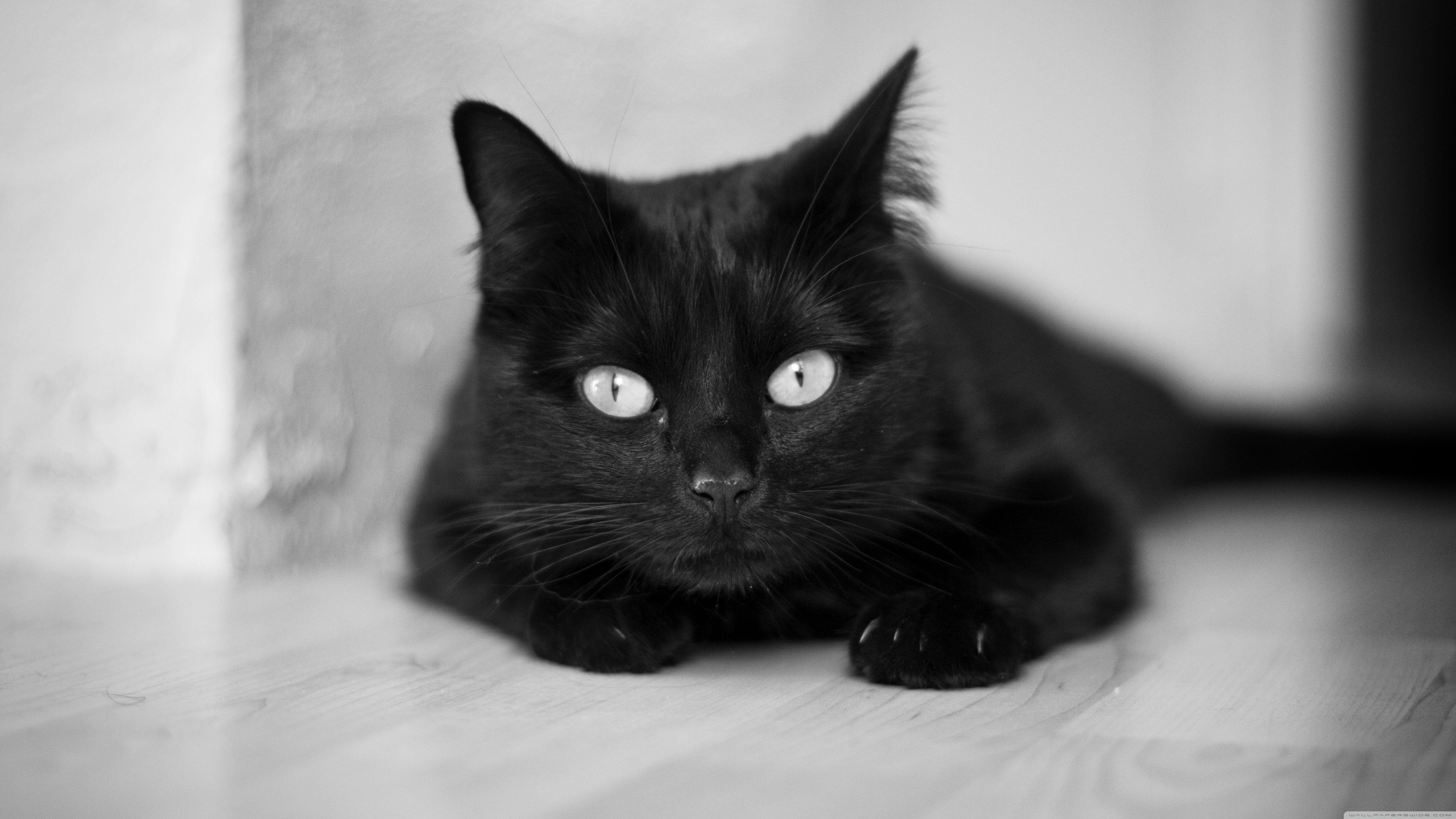 5120x2880 Black and White Cat ❤ 4K HD Wallpaper Wallpaper لتلفزيون 4K Ultra HD