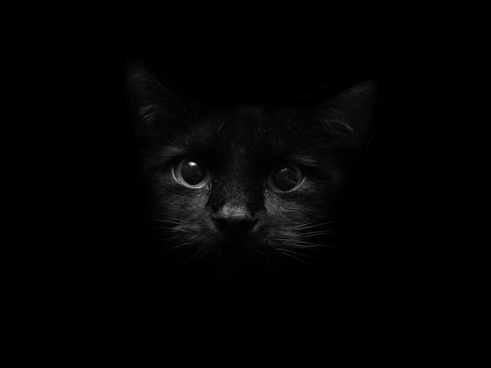 68 Best Free Black Cat Wallpapers Wallpaperaccess