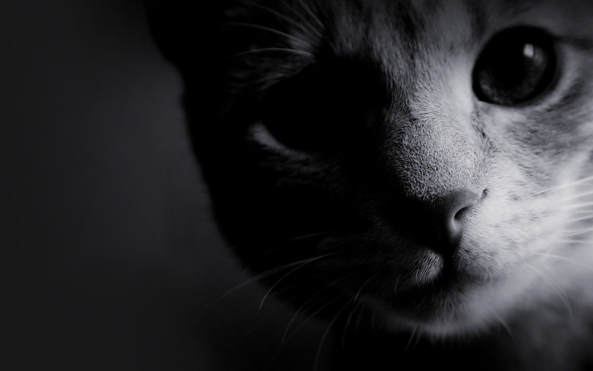 Black And White Cat Wallpapers Top Free Black And White Cat Backgrounds Wallpaperaccess