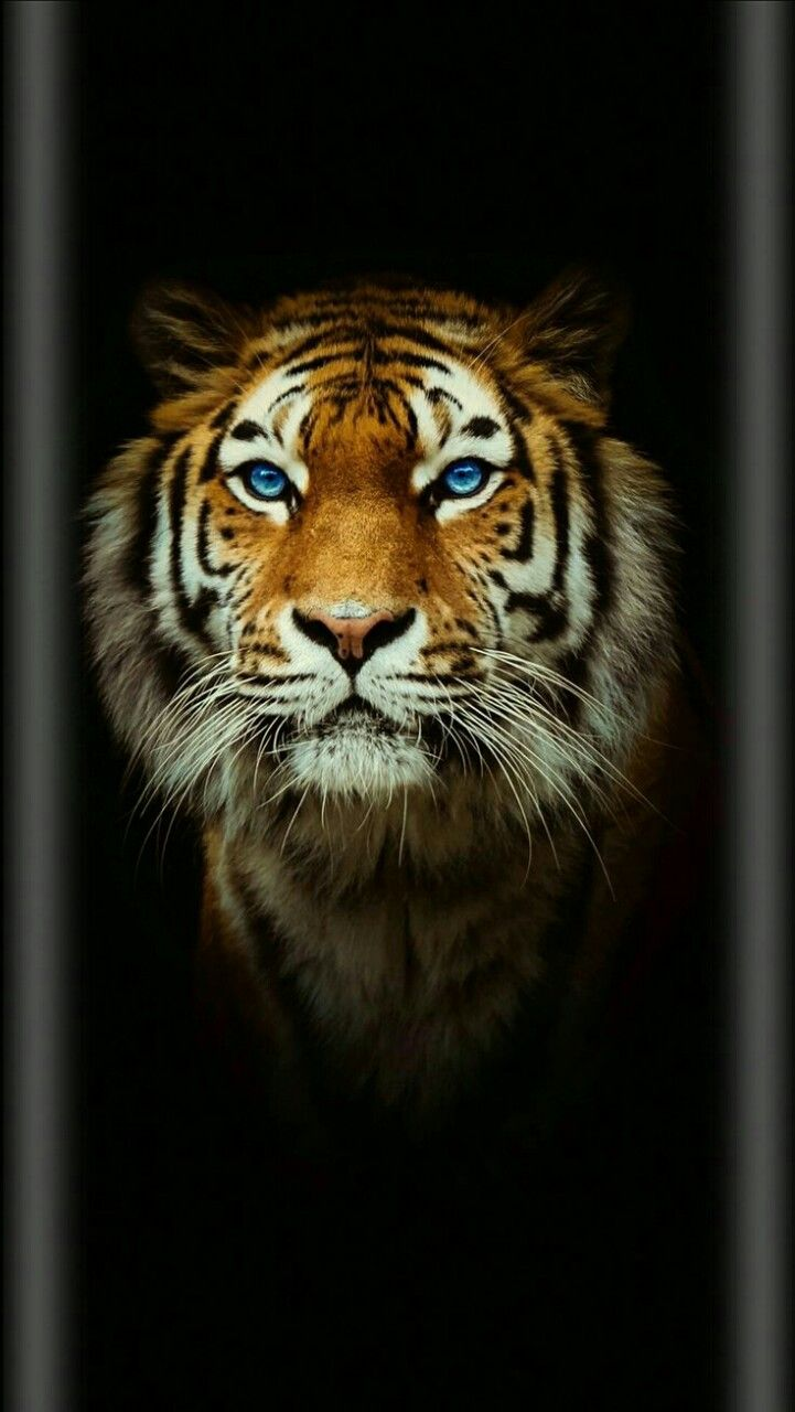 72 Best Free 3d Animal Iphone Wallpapers Wallpaperaccess