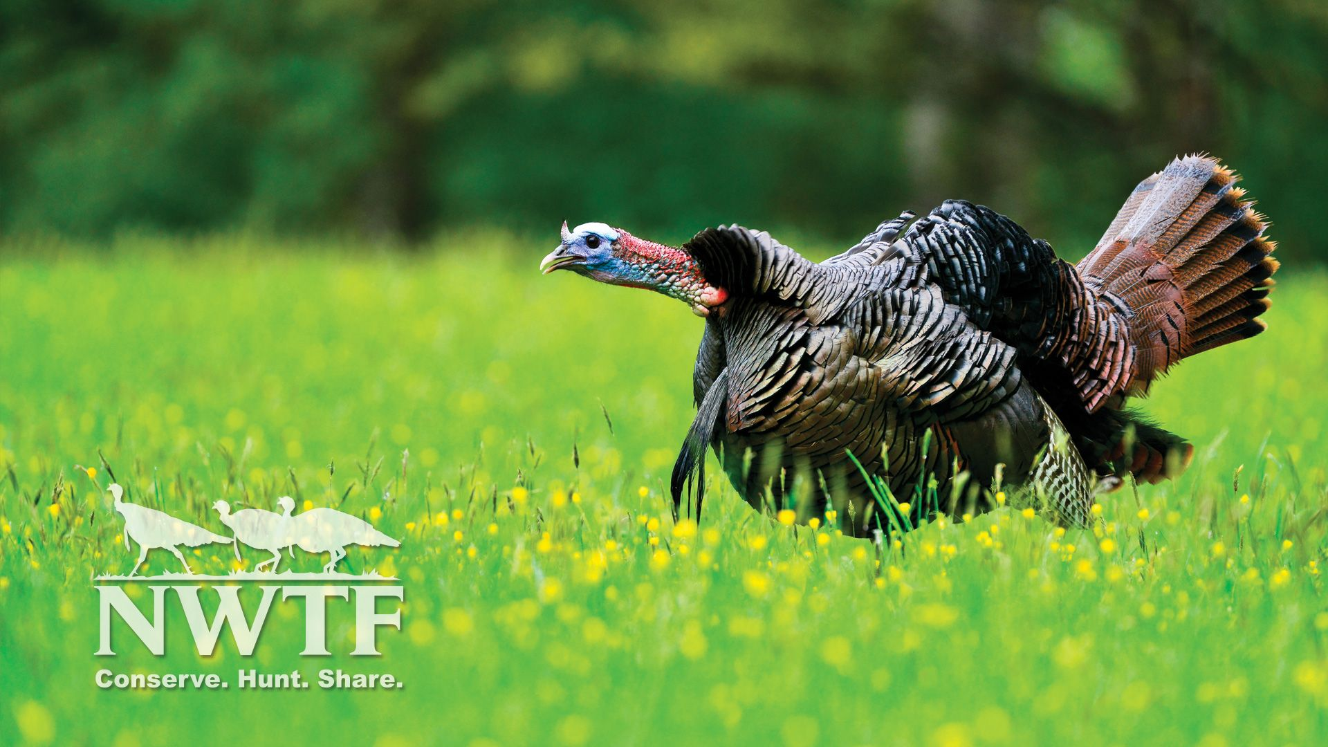 Turkey Hunting Wallpapers Top Free Turkey Hunting Backgrounds Wallpaperaccess