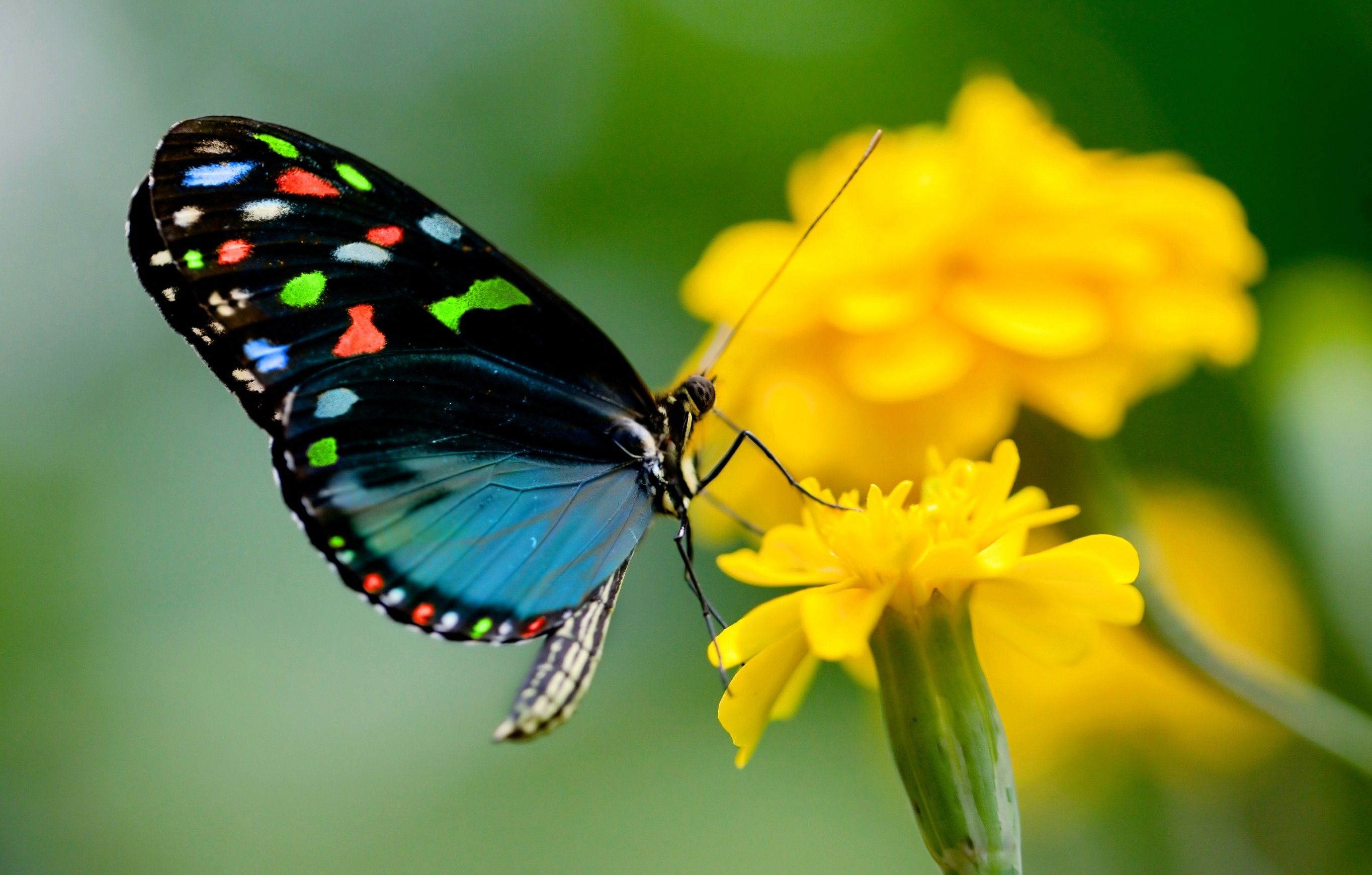 Beautiful Butterfly Wallpapers Top Free Beautiful Butterfly