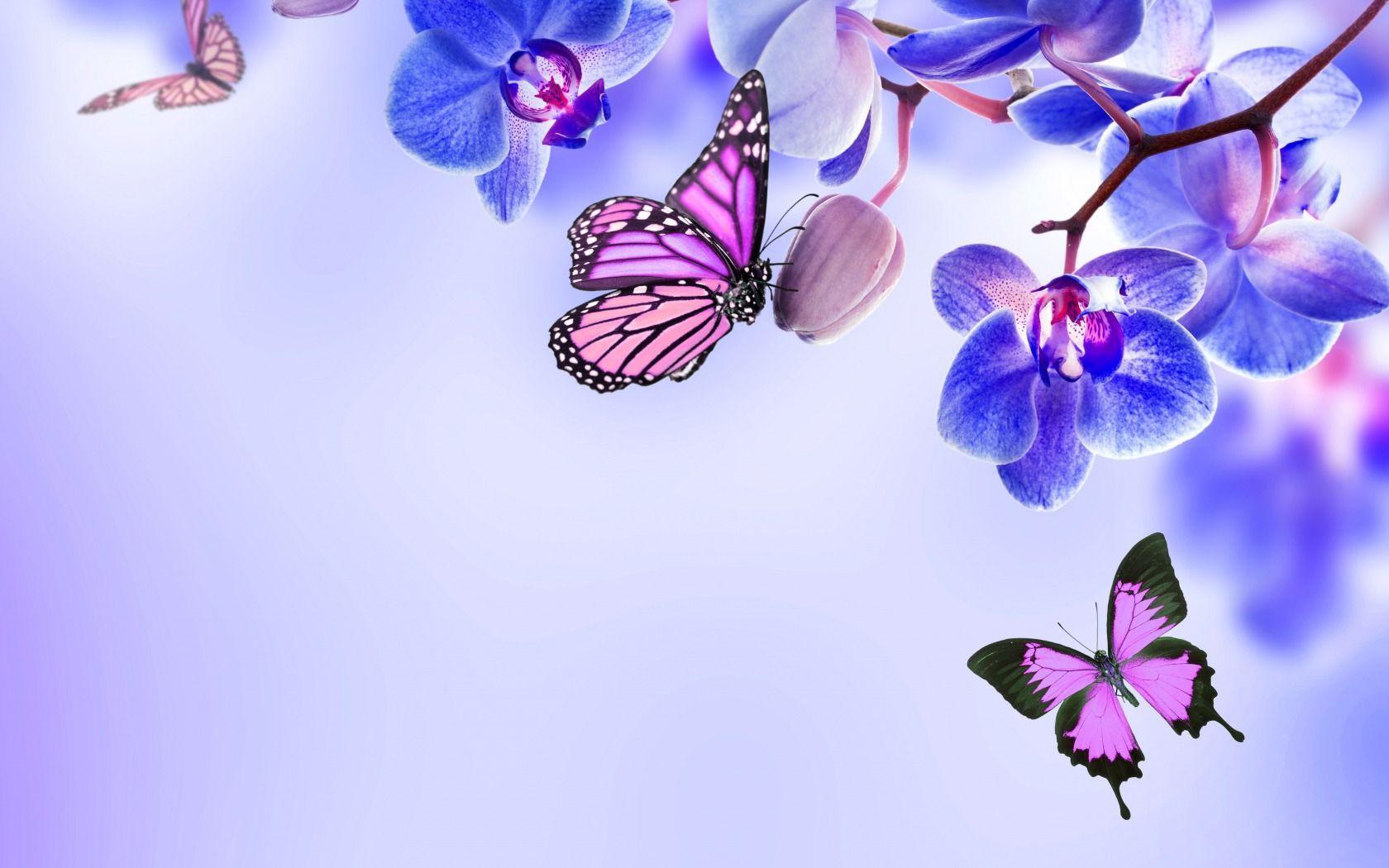 63 Best Free Butterfly Wallpapers Wallpaperaccess
