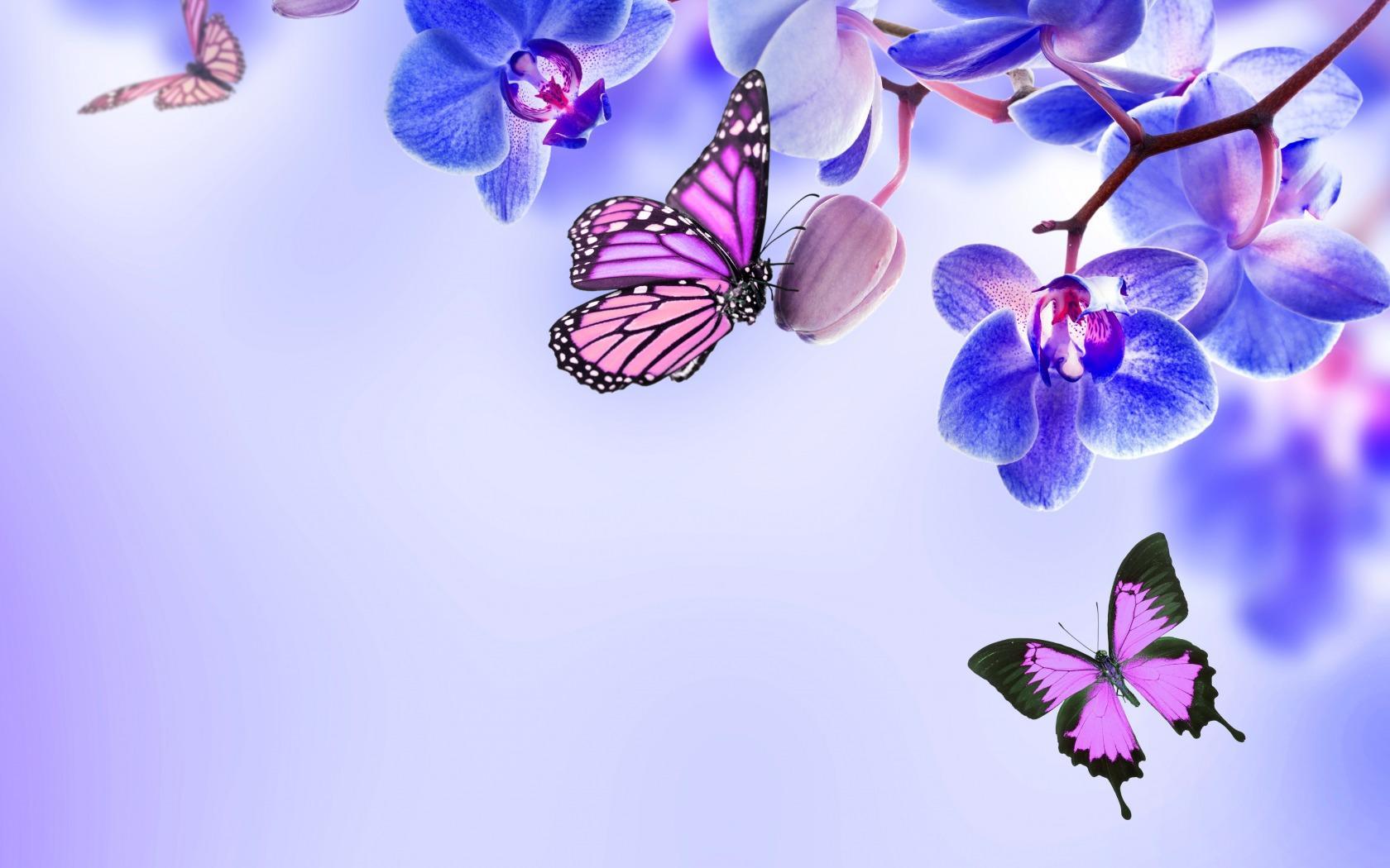 Butterflies Laptop Wallpapers Top Free Butterflies Laptop