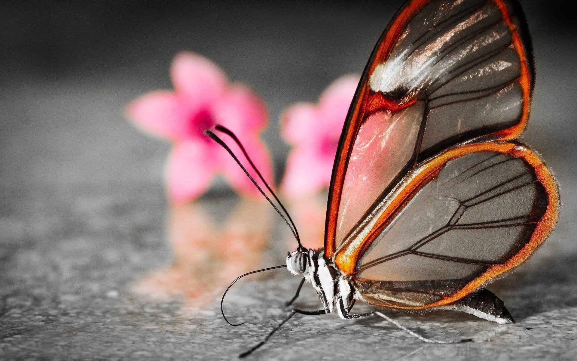 3d Butterfly Wallpapers Top Free 3d Butterfly Backgrounds Wallpaperaccess