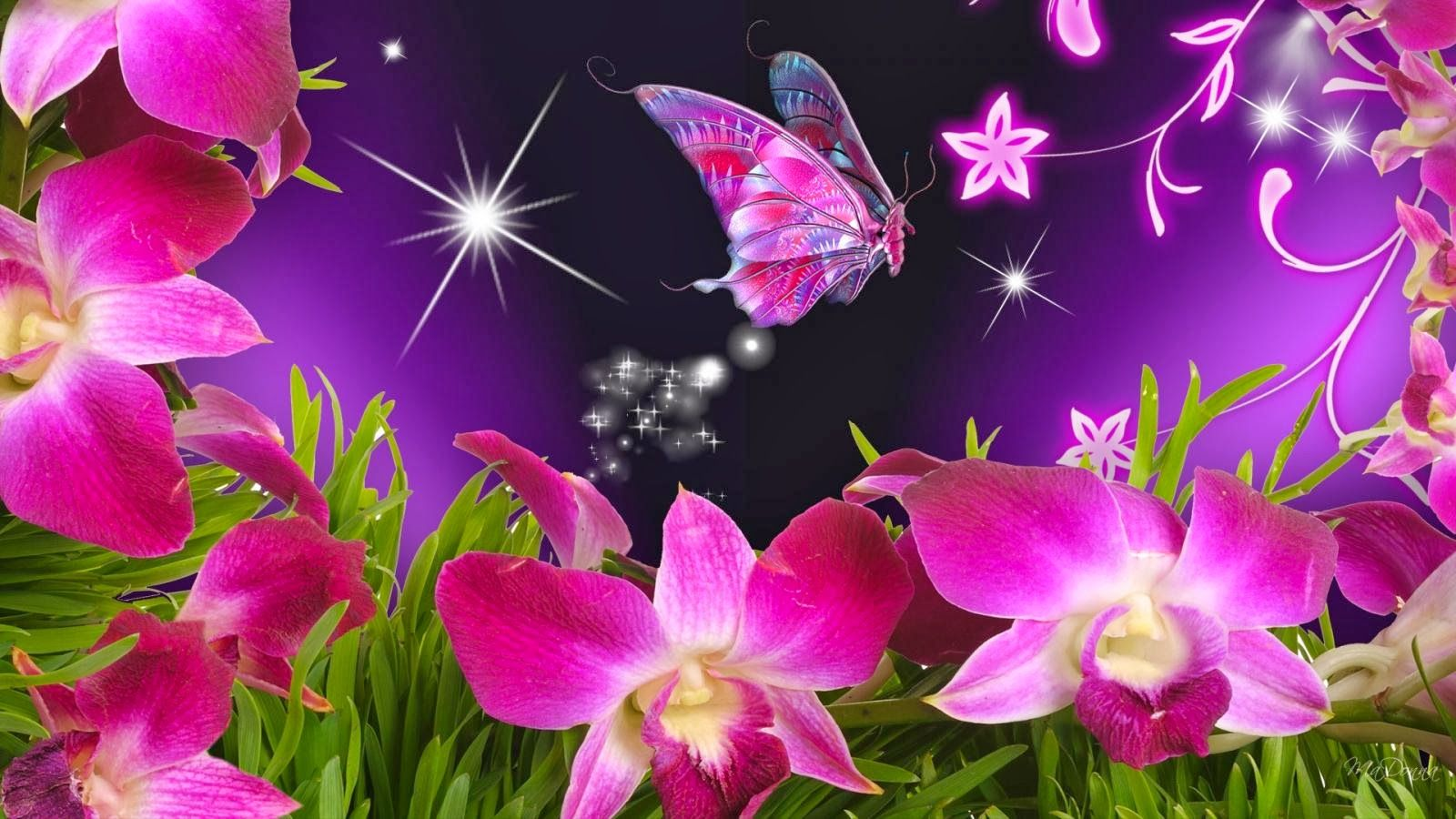 Butterfly And Flowers Wallpapers Top Free Butterfly And