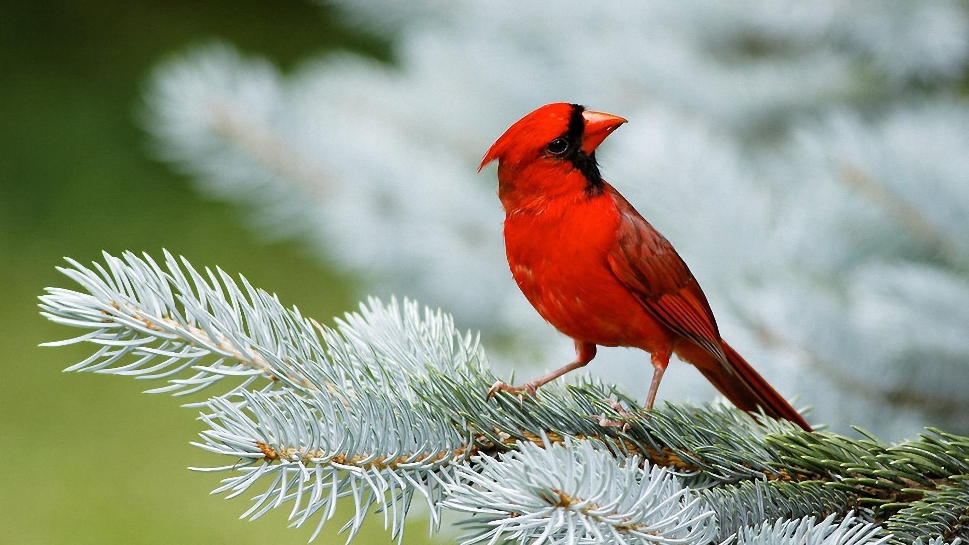 Beautiful Birds Wallpapers Top Free Beautiful Birds Backgrounds Wallpaperaccess