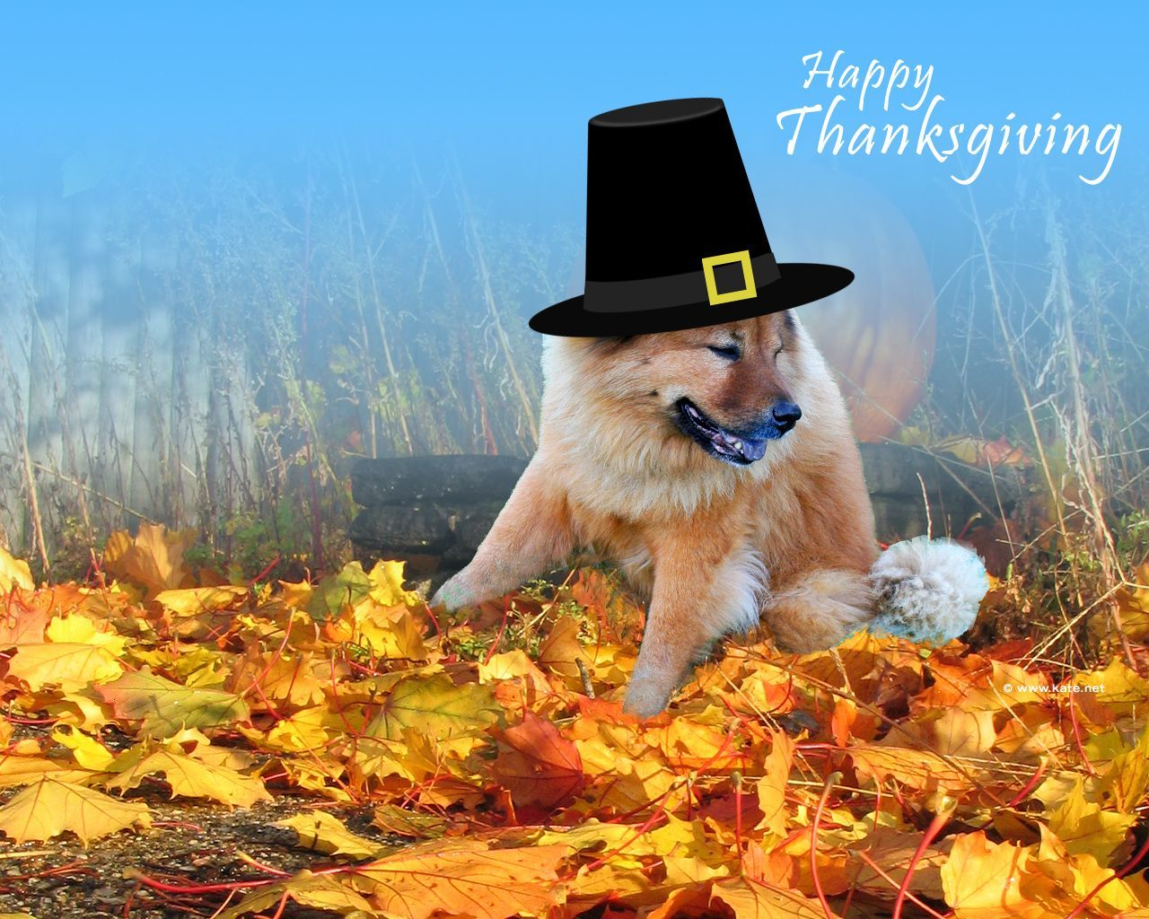 57 Best Free Pilgrim Thanksgiving Desktop Wallpapers Wallpaperaccess