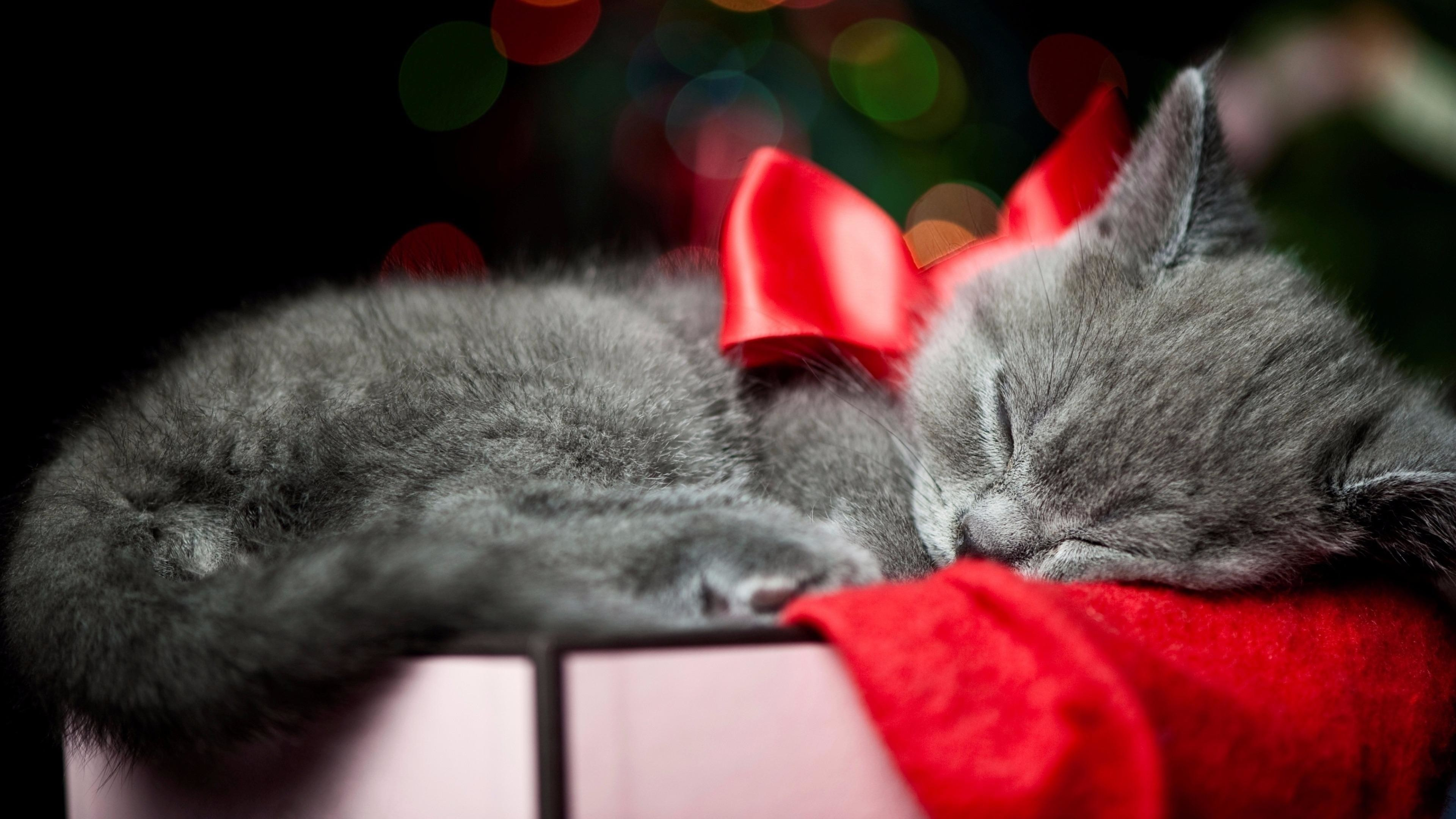 Christmas Kittens Wallpapers Top Free Christmas Kittens Backgrounds Wallpaperaccess