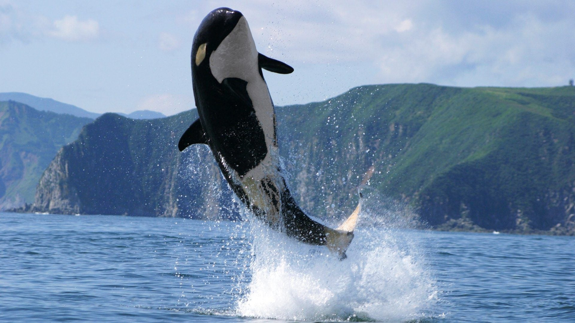 Orca Wallpapers Top Free Orca Backgrounds Wallpaperaccess
