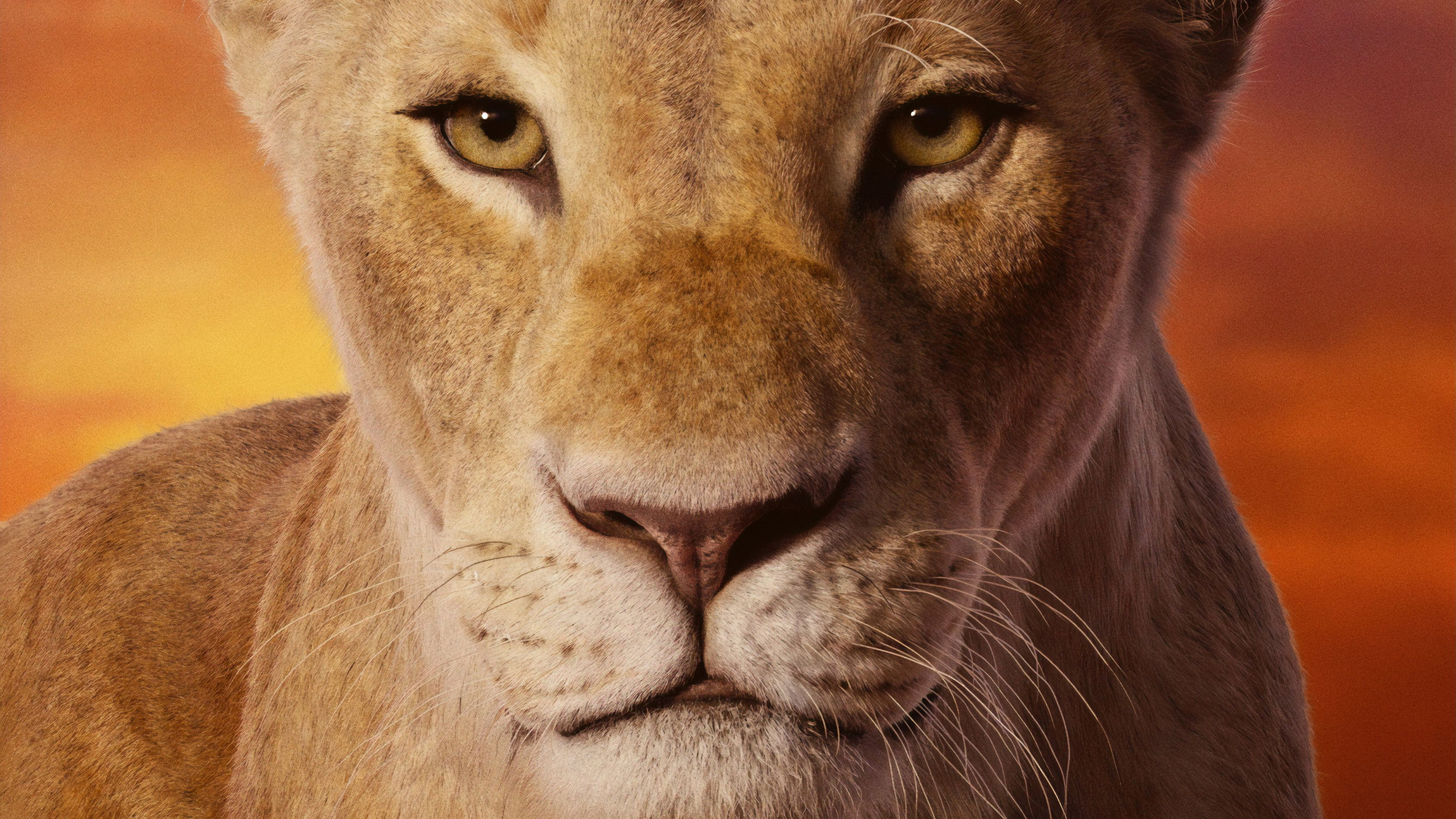 Lion King 4k Wallpapers Top Free Lion King 4k Backgrounds