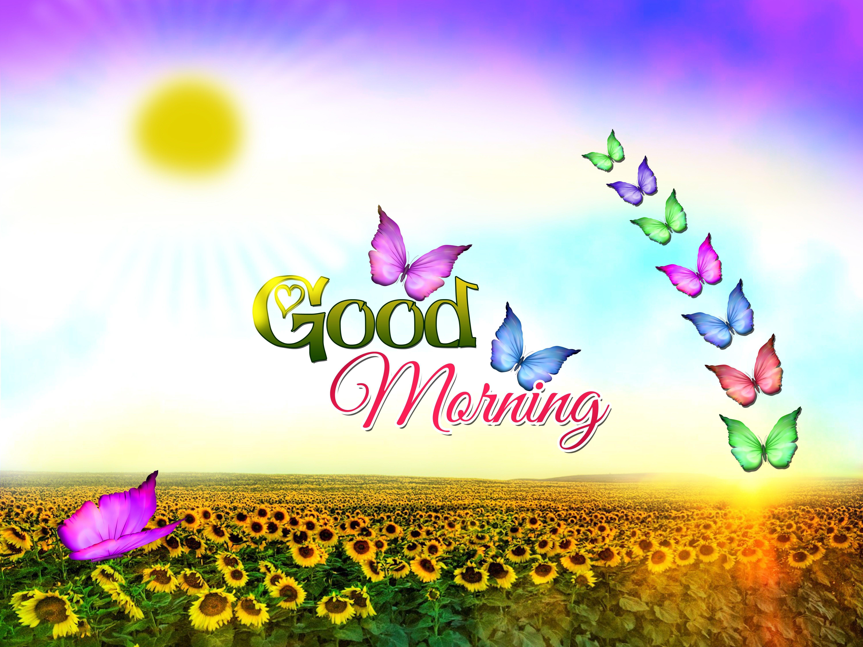 6000x4500 Chào buổi sáng - Bướm và Mặt trời.  Tin nhắn văn bản chào buổi sáng, Hình nền buổi sáng tốt lành, Hình ảnh buổi sáng tốt lành