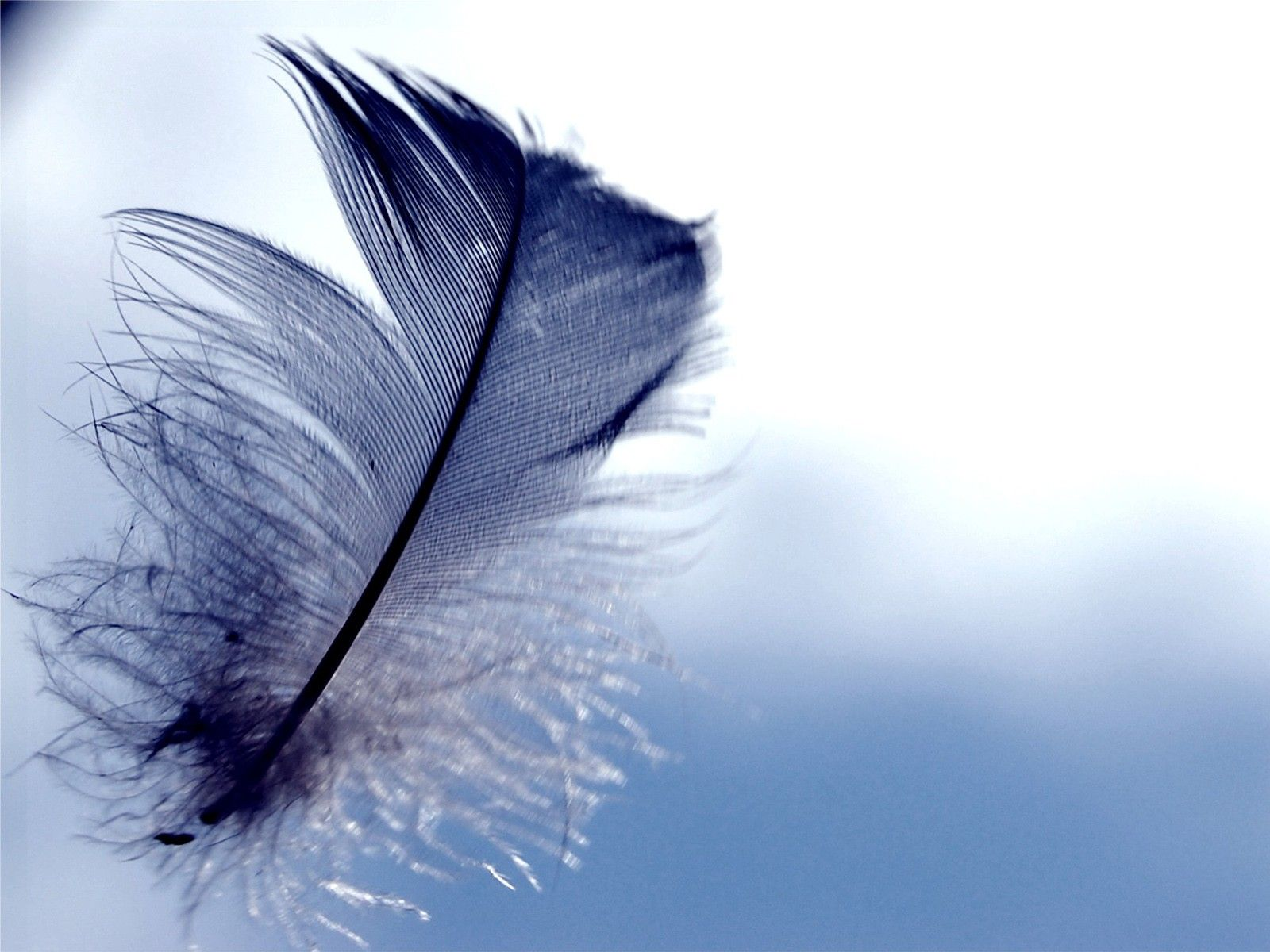Feathers Wallpapers Top Free Feathers Backgrounds
