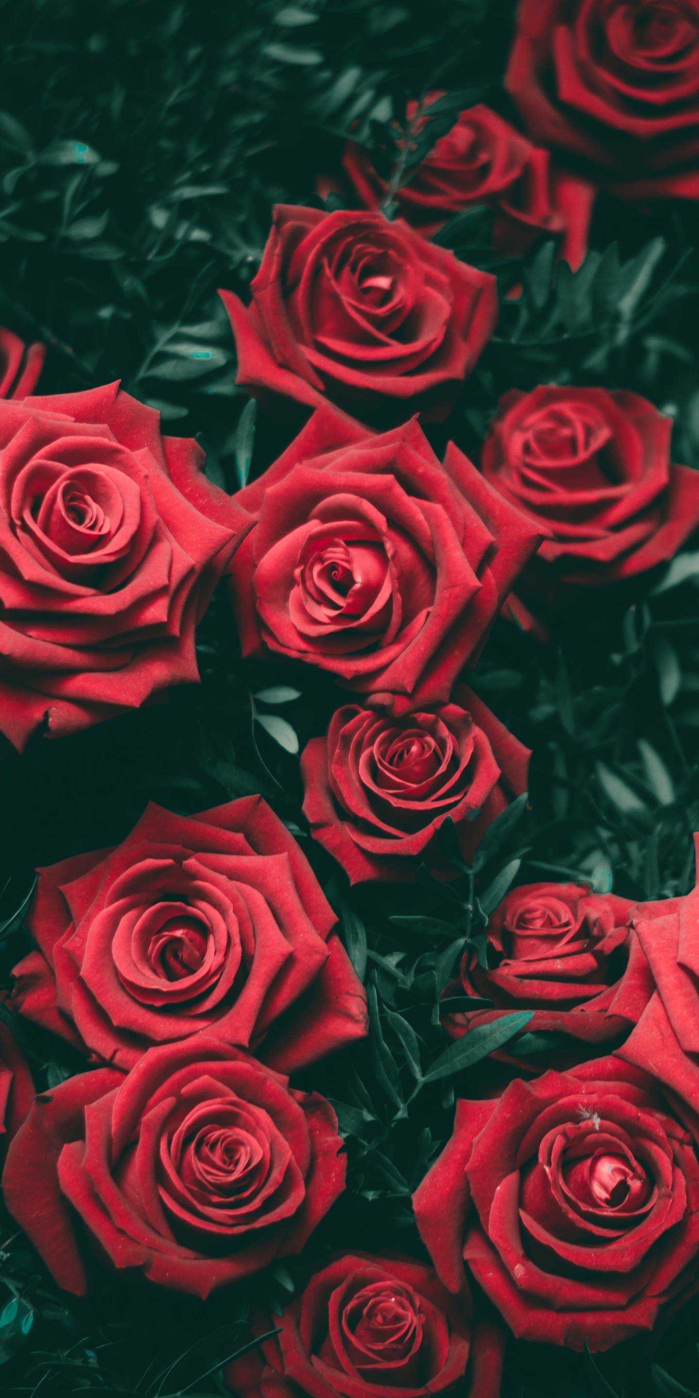 Red Rose Aesthetic Wallpapers Top Free Red Rose Aesthetic