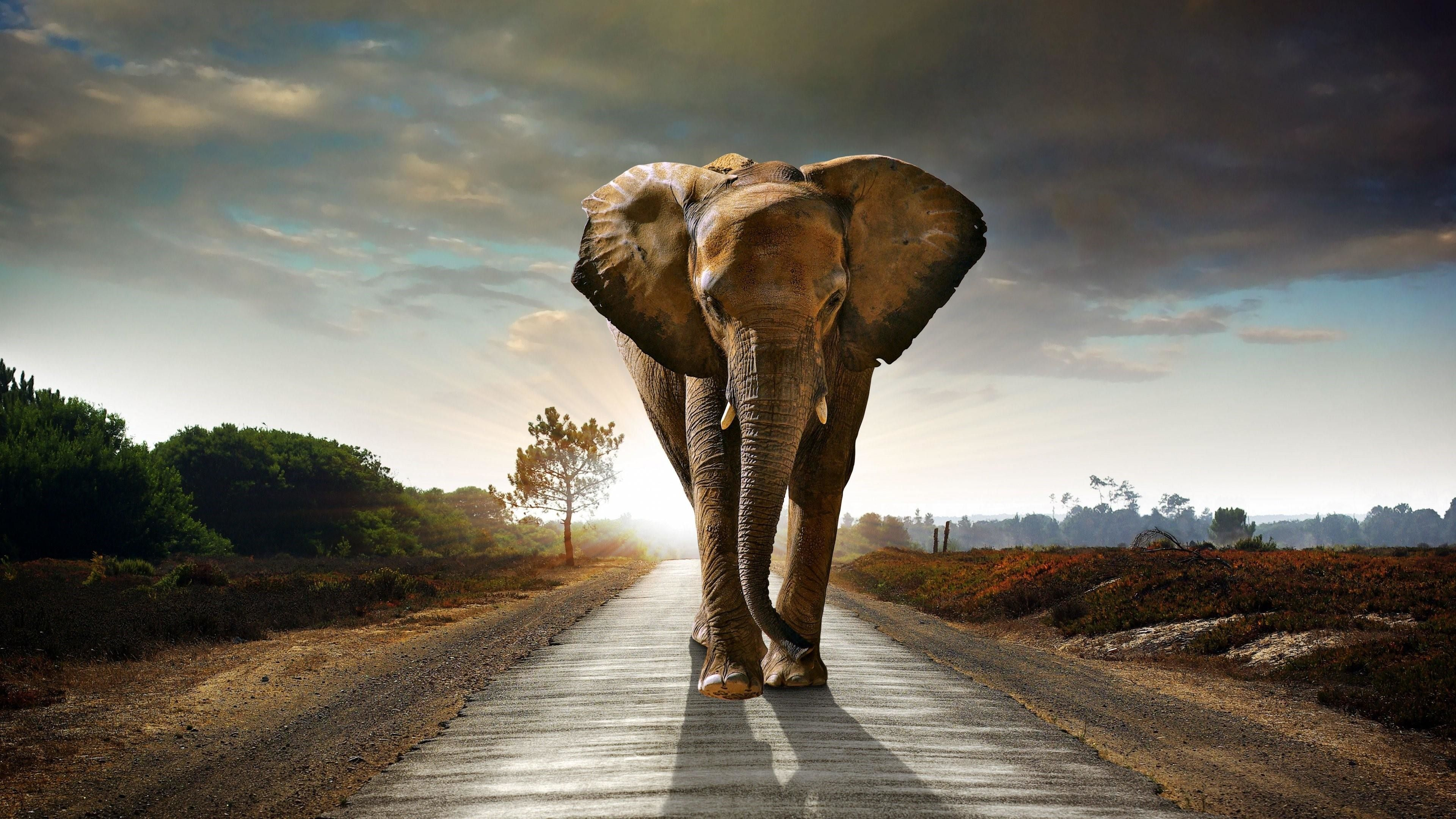 Elephant Wallpapers Top Free Elephant Backgrounds Wallpaperaccess