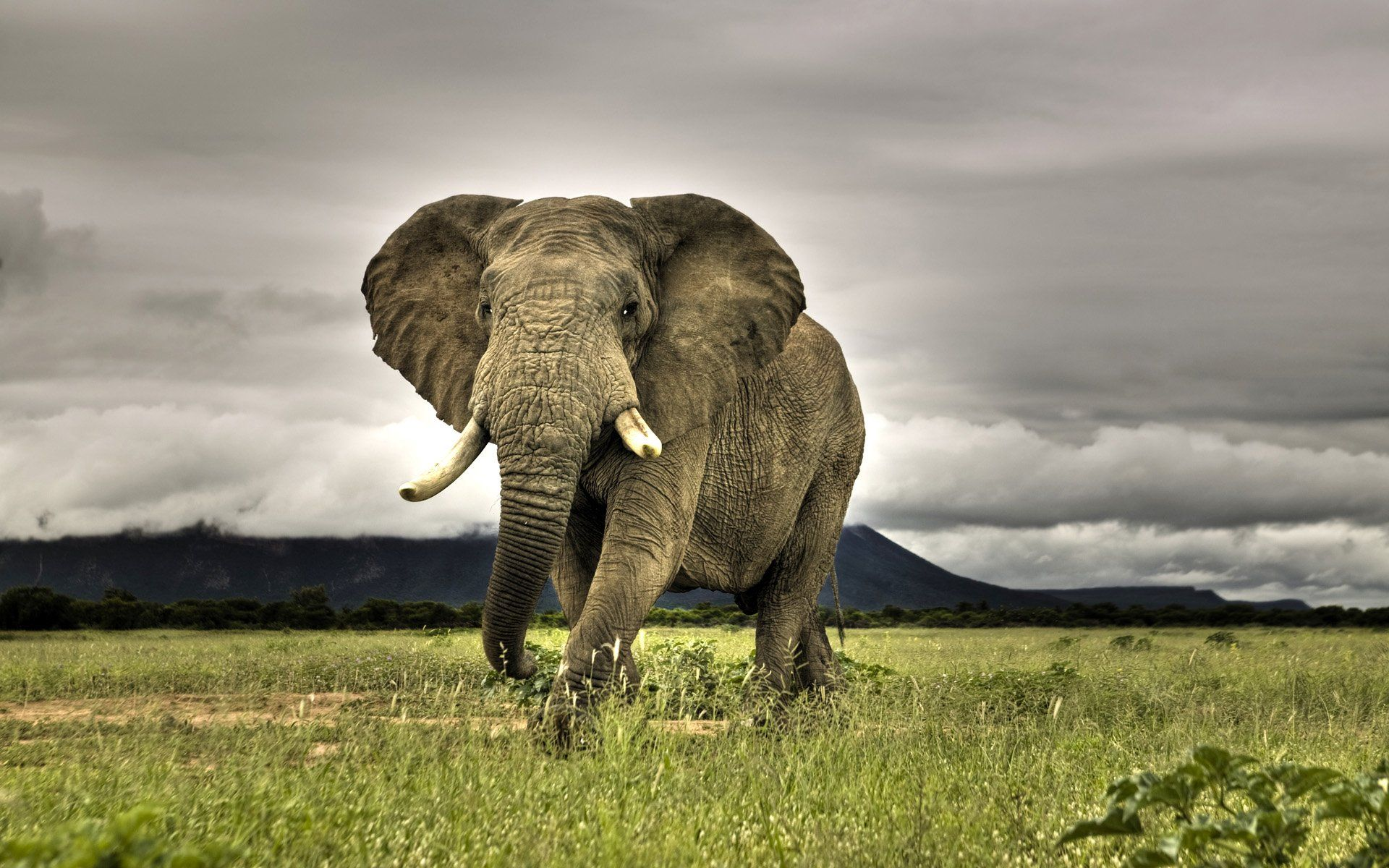 Elephant Wallpapers Top Free Elephant Backgrounds