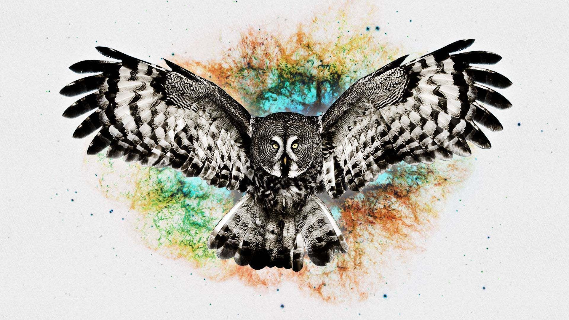 Abstract Owl Wallpapers Top Free Abstract Owl Backgrounds Wallpaperaccess