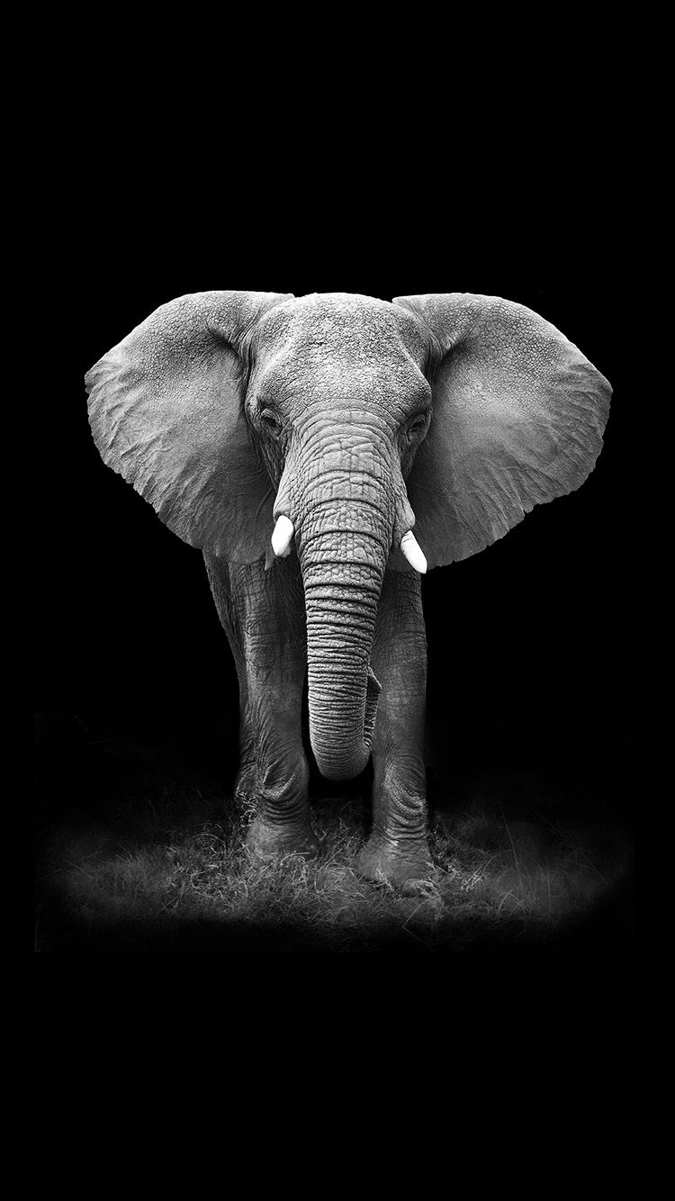 Elephant iPhone Wallpapers   Top Free Elephant iPhone Backgrounds ...