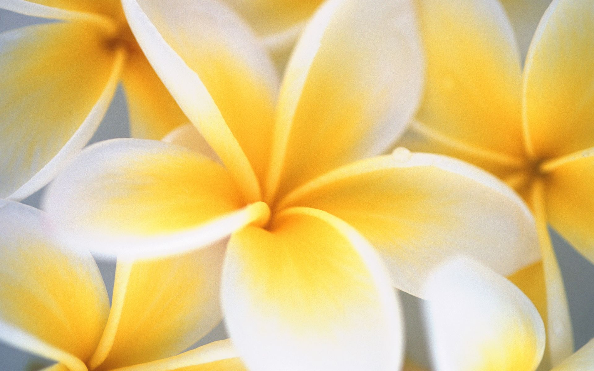 Yellow And White Flower Wallpapers Top Free Yellow And White Flower Backgrounds Wallpaperaccess