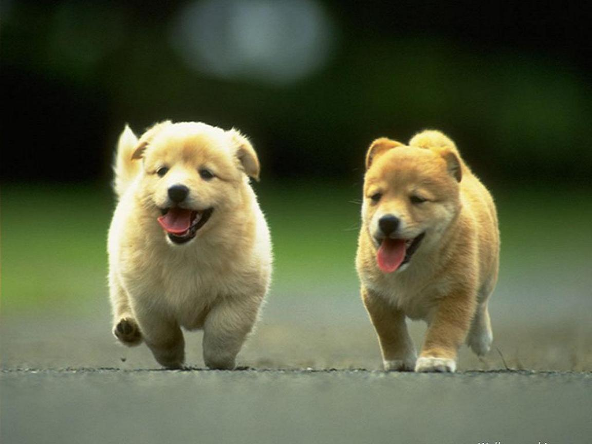 Puppy Dogs Wallpapers Top Free Puppy Dogs Backgrounds Wallpaperaccess