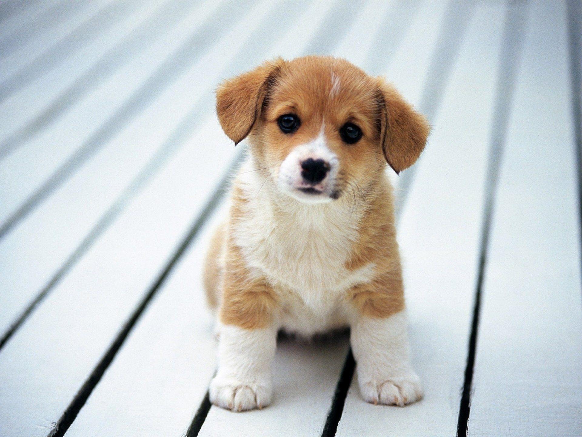 Beautiful Dog Wallpapers Top Free Beautiful Dog Backgrounds Wallpaperaccess