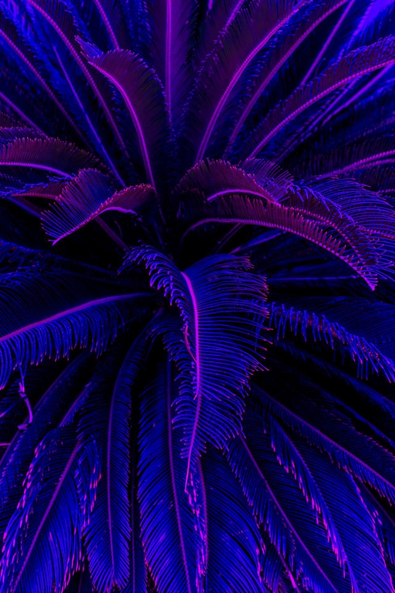 Purple Aesthetic iPhone Wallpapers - Top Free Purple ...