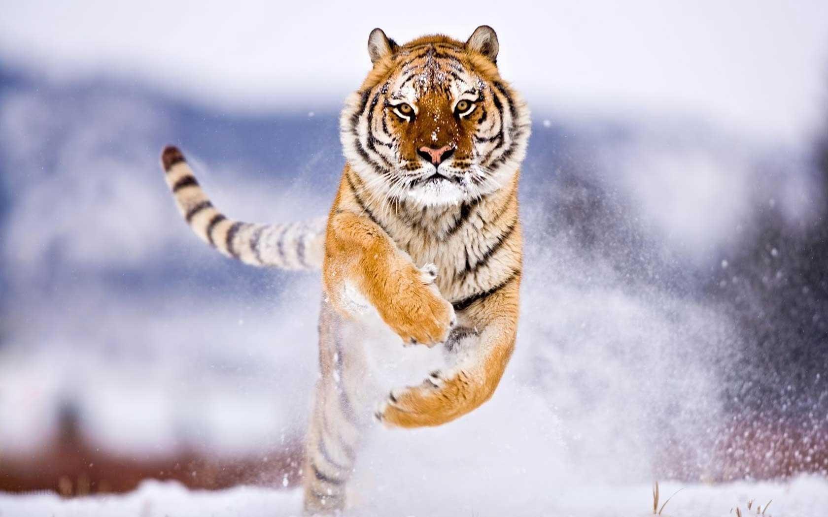 1680x1050 Wild Animals Wallpapers