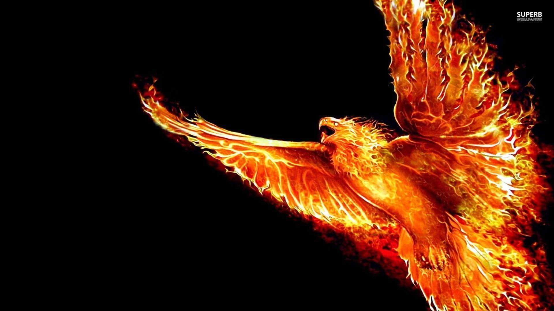 Hd Phoenix Wallpapers Top Free Hd Phoenix Backgrounds