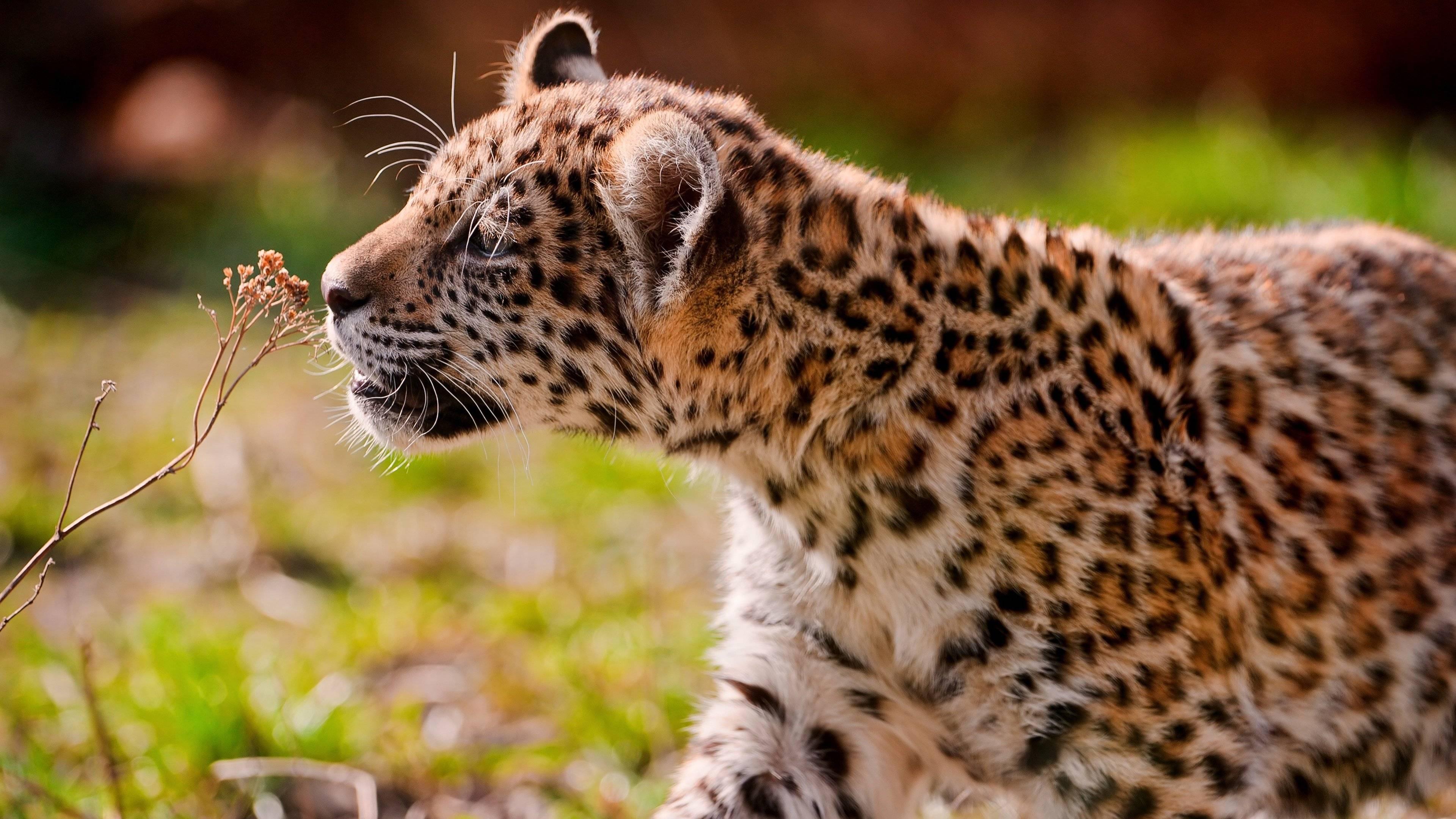 Baby Animal 4K Wallpapers - Top Free Baby Animal 4K ...