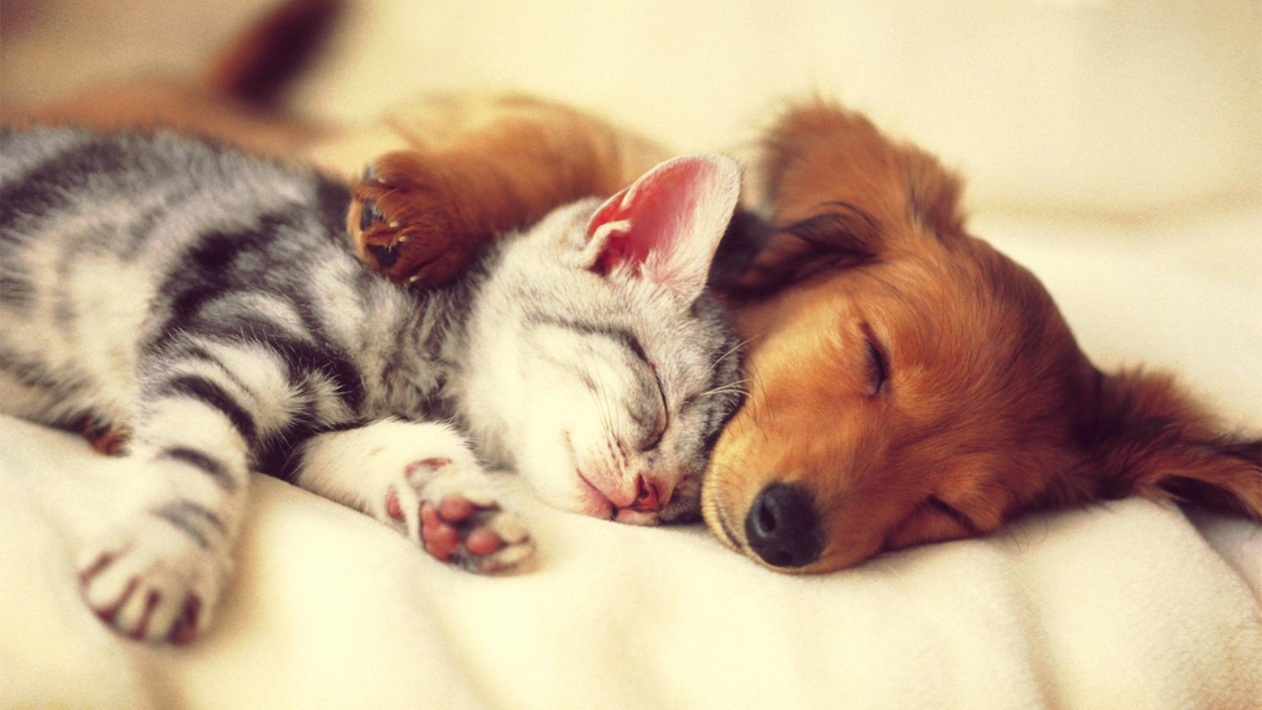 Cute Cats And Dogs Wallpapers Top Free Cute Cats And Dogs Backgrounds Wallpaperaccess