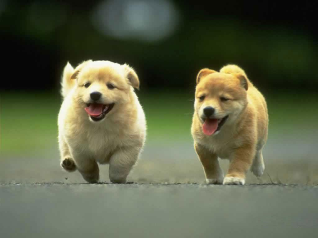 Cute Dog Hd Wallpapers Top Free Cute Dog Hd Backgrounds