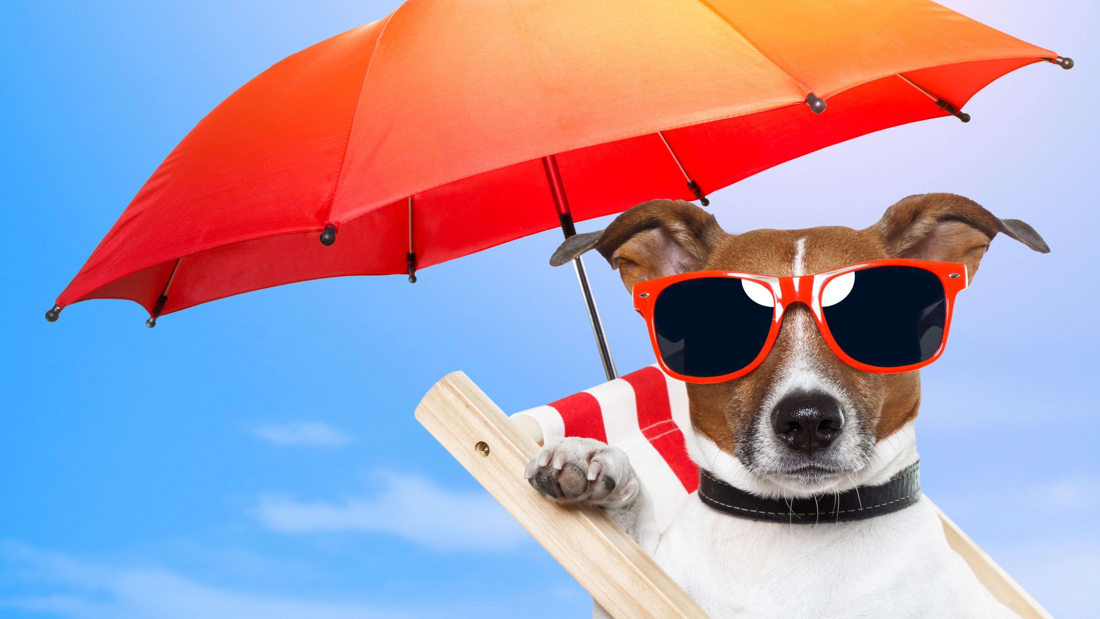 Cute Dog Summer Wallpapers Top Free Cute Dog Summer Backgrounds Wallpaperaccess