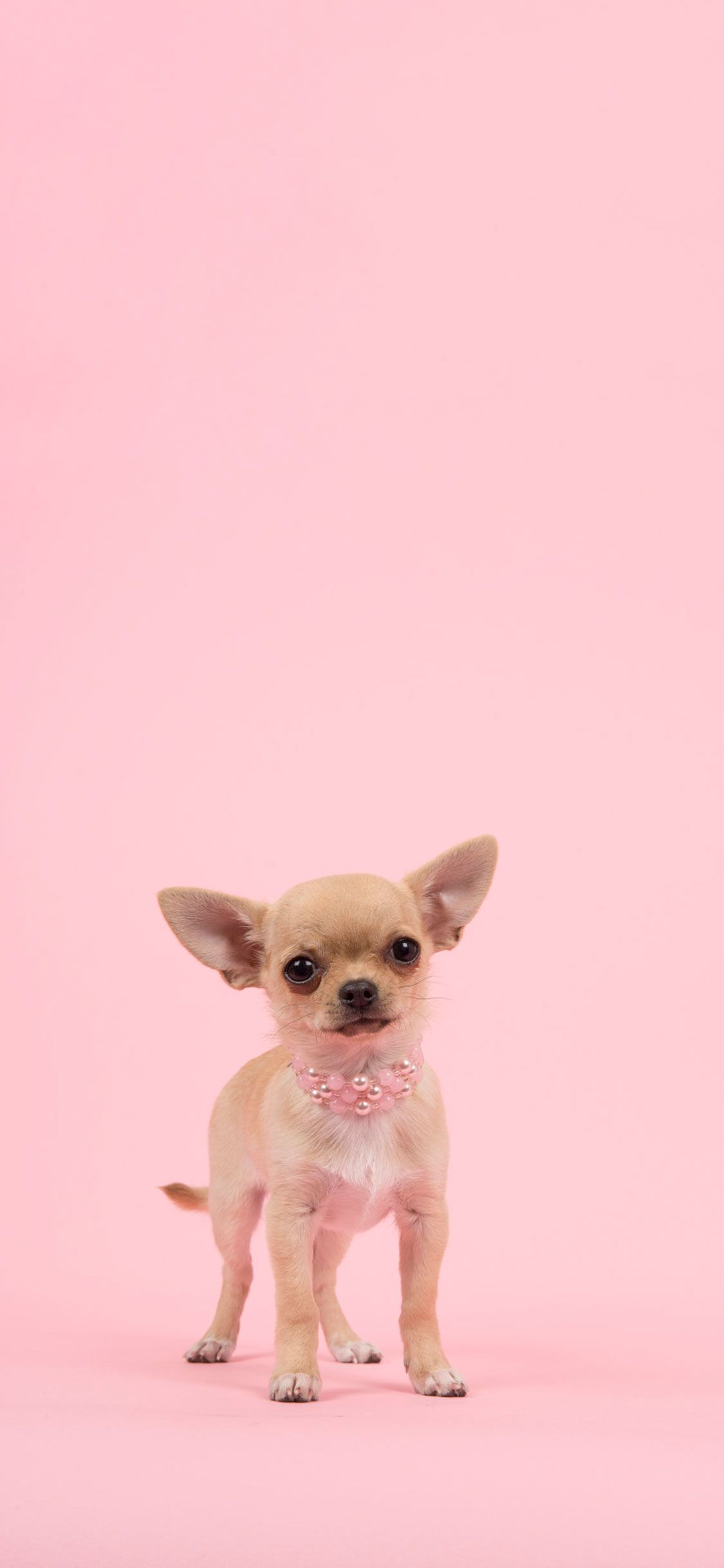 Pink Dog Wallpapers Top Free Pink Dog Backgrounds Wallpaperaccess