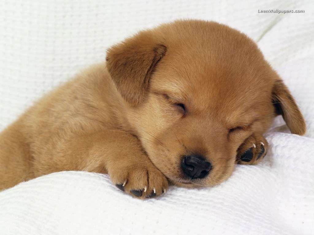 Puppy Wallpapers - Top Free Puppy