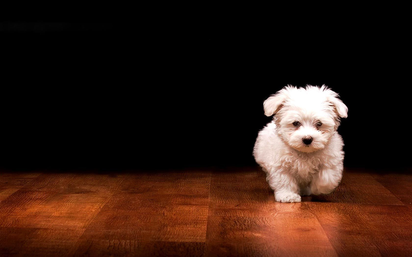 Dogs Laptop Wallpapers Top Free Dogs Laptop Backgrounds Wallpaperaccess