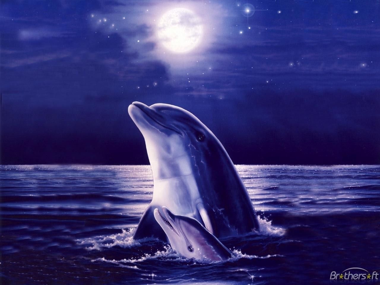 Cool Dolphin Wallpapers Top Free Cool Dolphin Backgrounds