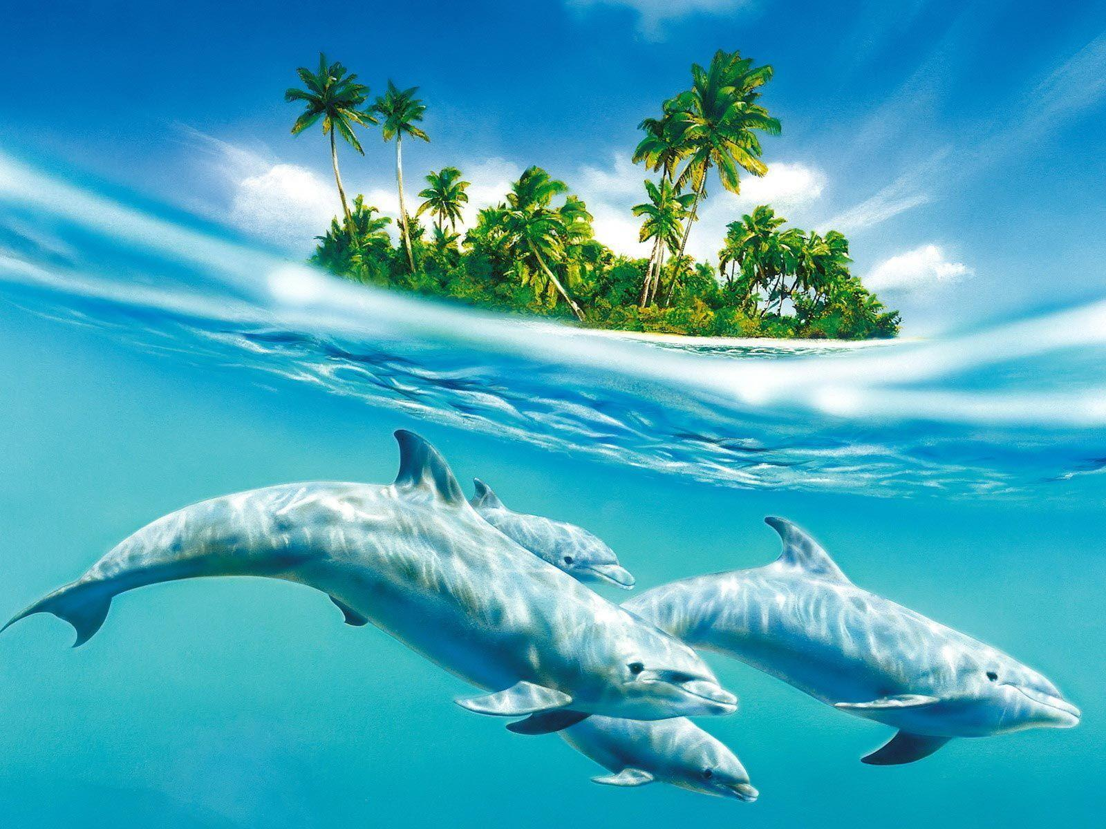 Dolphin Desktop Wallpapers Top Free Dolphin Desktop