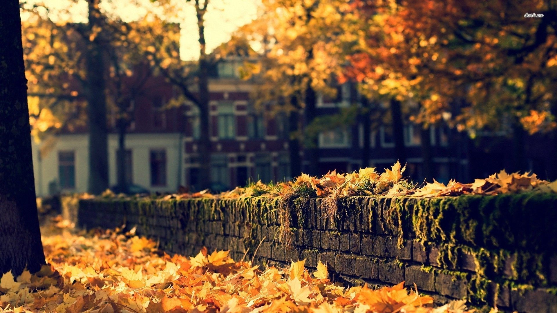 Autumn City Wallpapers Top Free Autumn City Backgrounds Wallpaperaccess