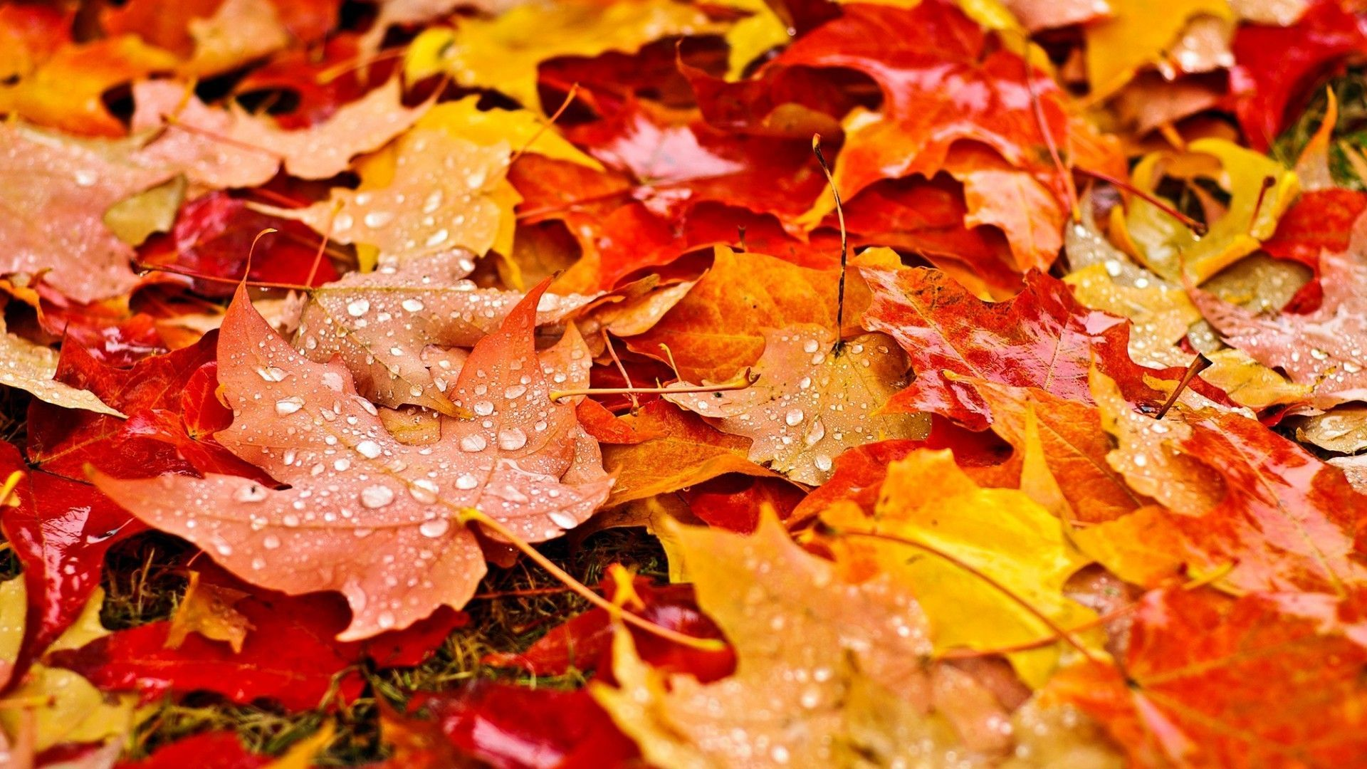 Fall Leaves Wallpapers Top Free Fall Leaves Backgrounds