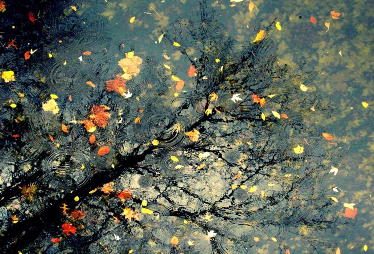 Autumn Rain Wallpapers - Top Free Autumn Rain Backgrounds ...