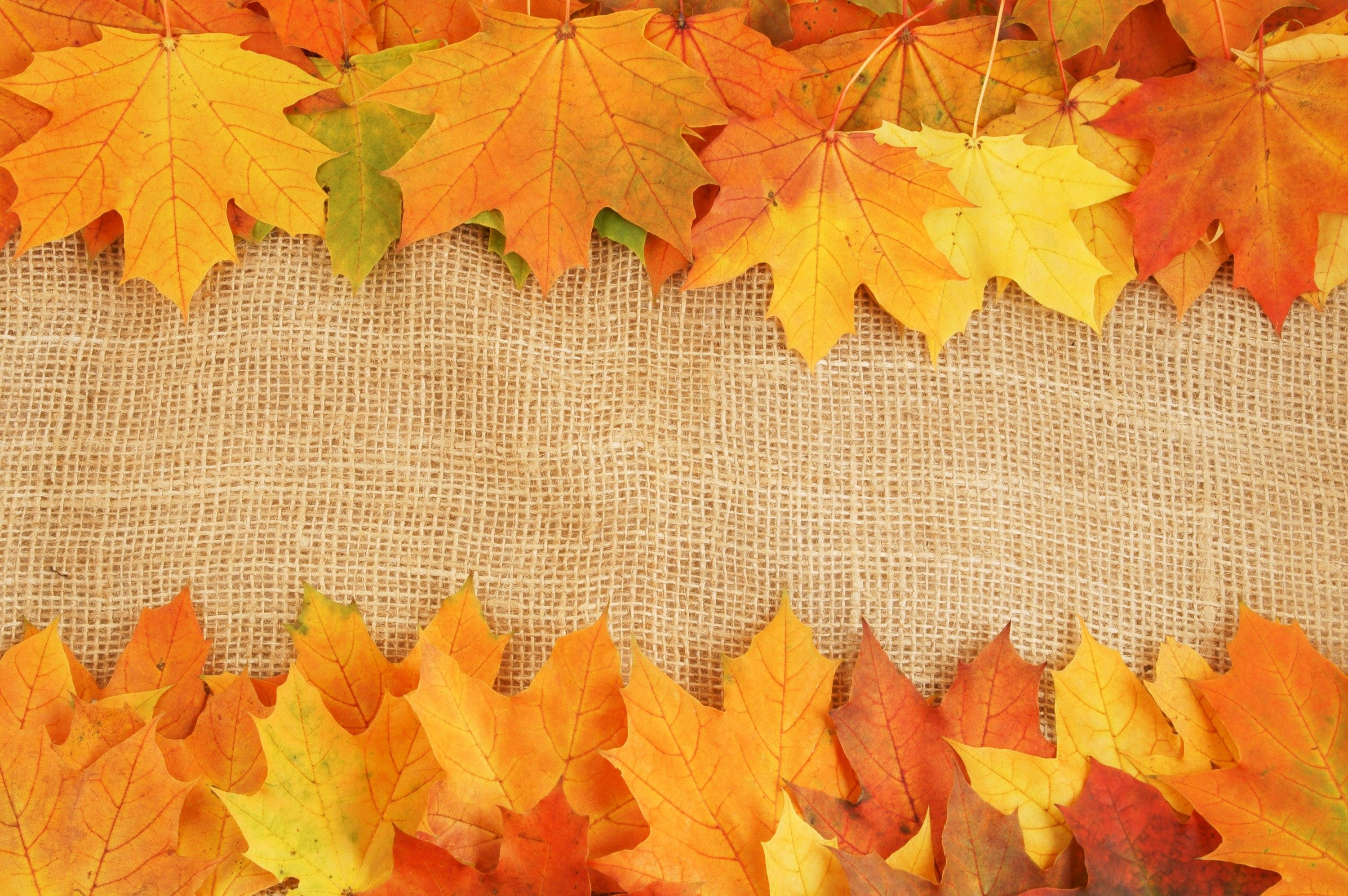 10+ Wallpaper Fall Leaves Background Gif
