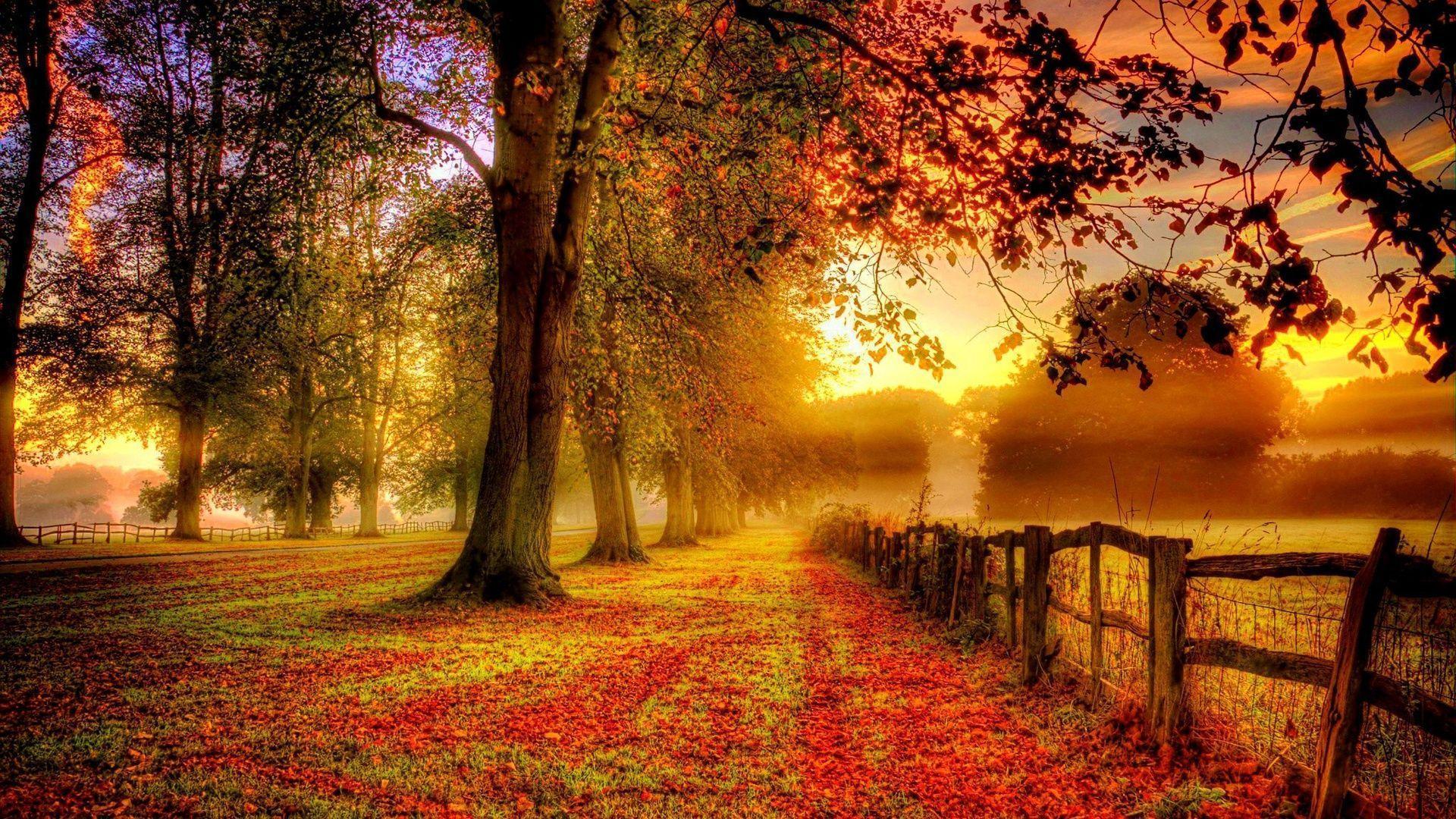 Autumn Desktop Wallpapers Top Free Autumn Desktop Backgrounds Wallpaperaccess